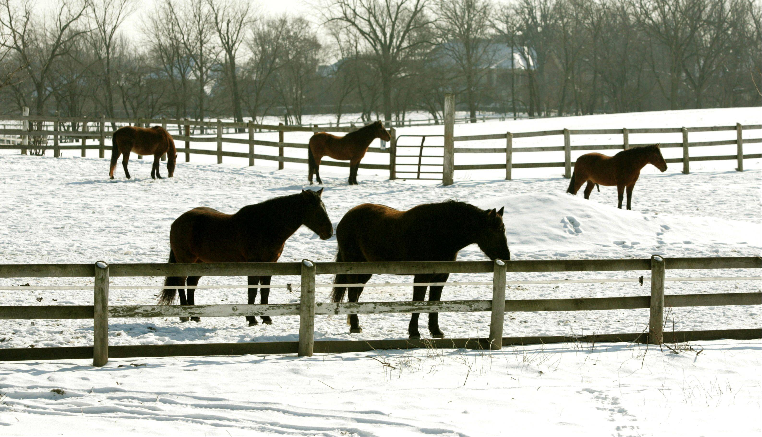 Some, including a DuPage County Forest Preserve commissioner, don't want the district advertising on the Internet when it's trying to find people to adopt horses from the Danada Equestrian Center.