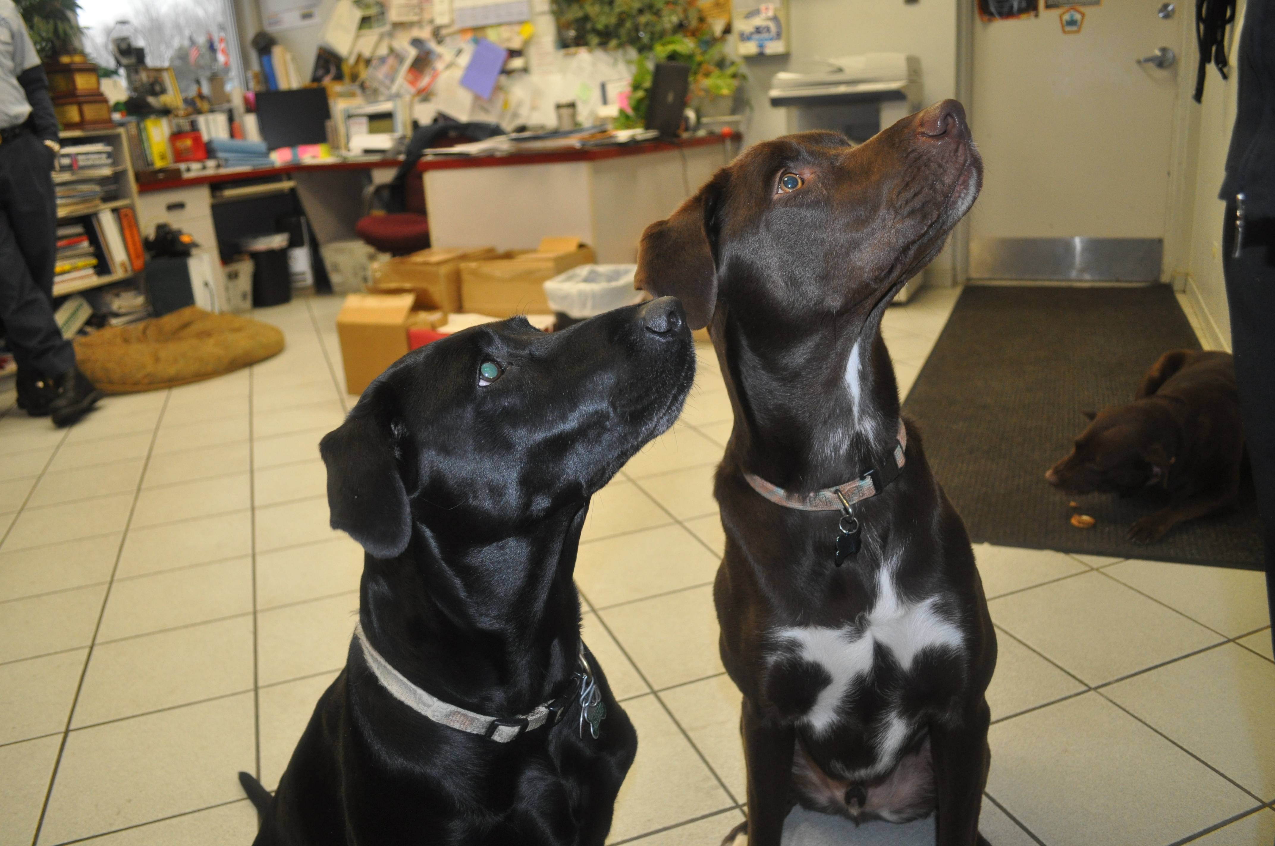 Morgan (left) and Buster (right) greet visitors at Bishop Plumbing, Inc. headquarters in Des Planes, IL