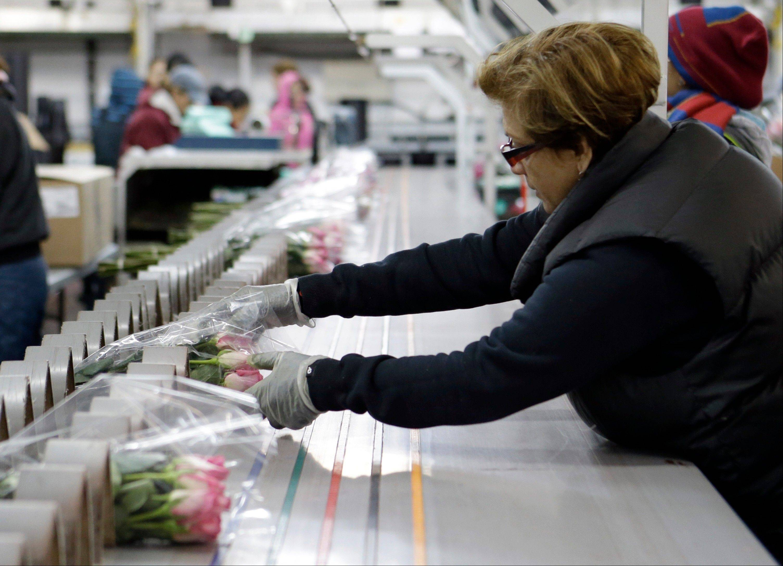 In this Thursday, Feb. 7, 2013, photo, workers at a floral import company prepare flowers for distribution to flower resellers throughout the country, in Miami. A measure of U.S. wholesale prices rose in February by the most in five months, pushed higher by more expensive gas and pharmaceuticals. But outside those increases, inflation was mild. The producer price index grew a seasonally adjusted 0.7 percent in February from January, the Labor Department said Thursday, March 14, 2013. That's up from 0.2 percent in the previous month. Wholesale gas prices increased 7.2 percent.