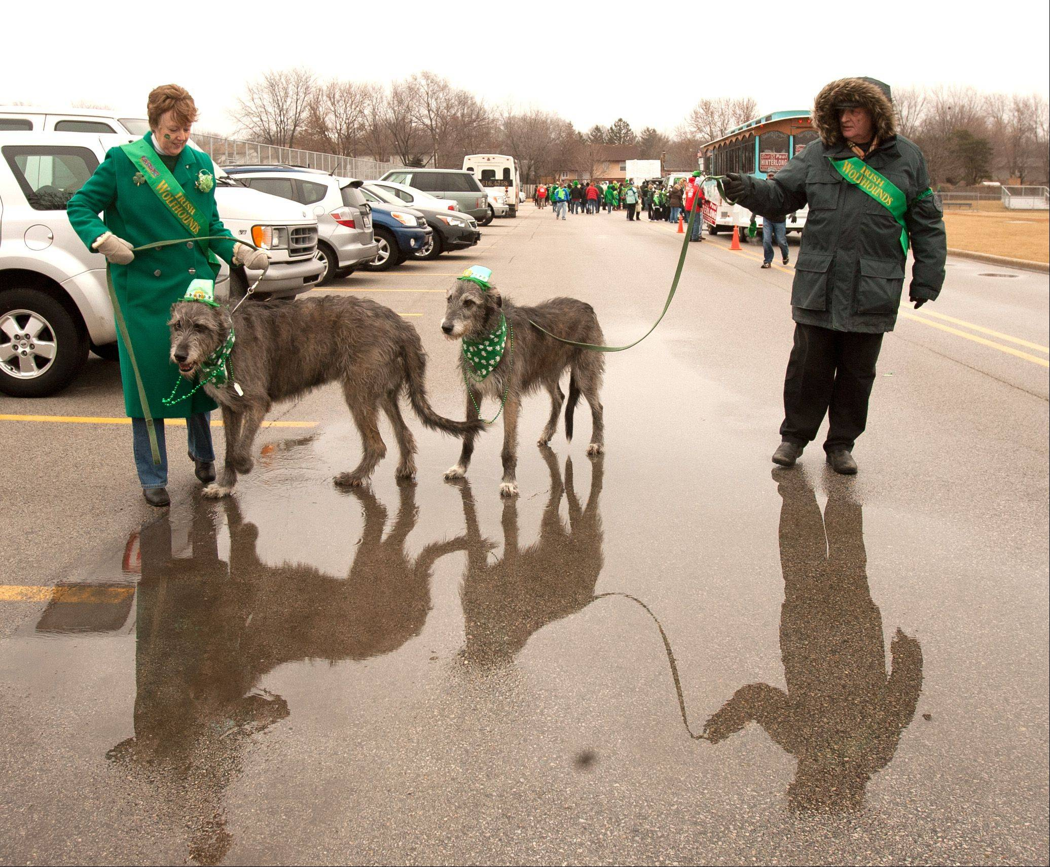 Joe and Madeline Mahoney of Shorewood and their two Irish Wolfhounds attend the Naperville's St. Patrick's Day parade Saturday.