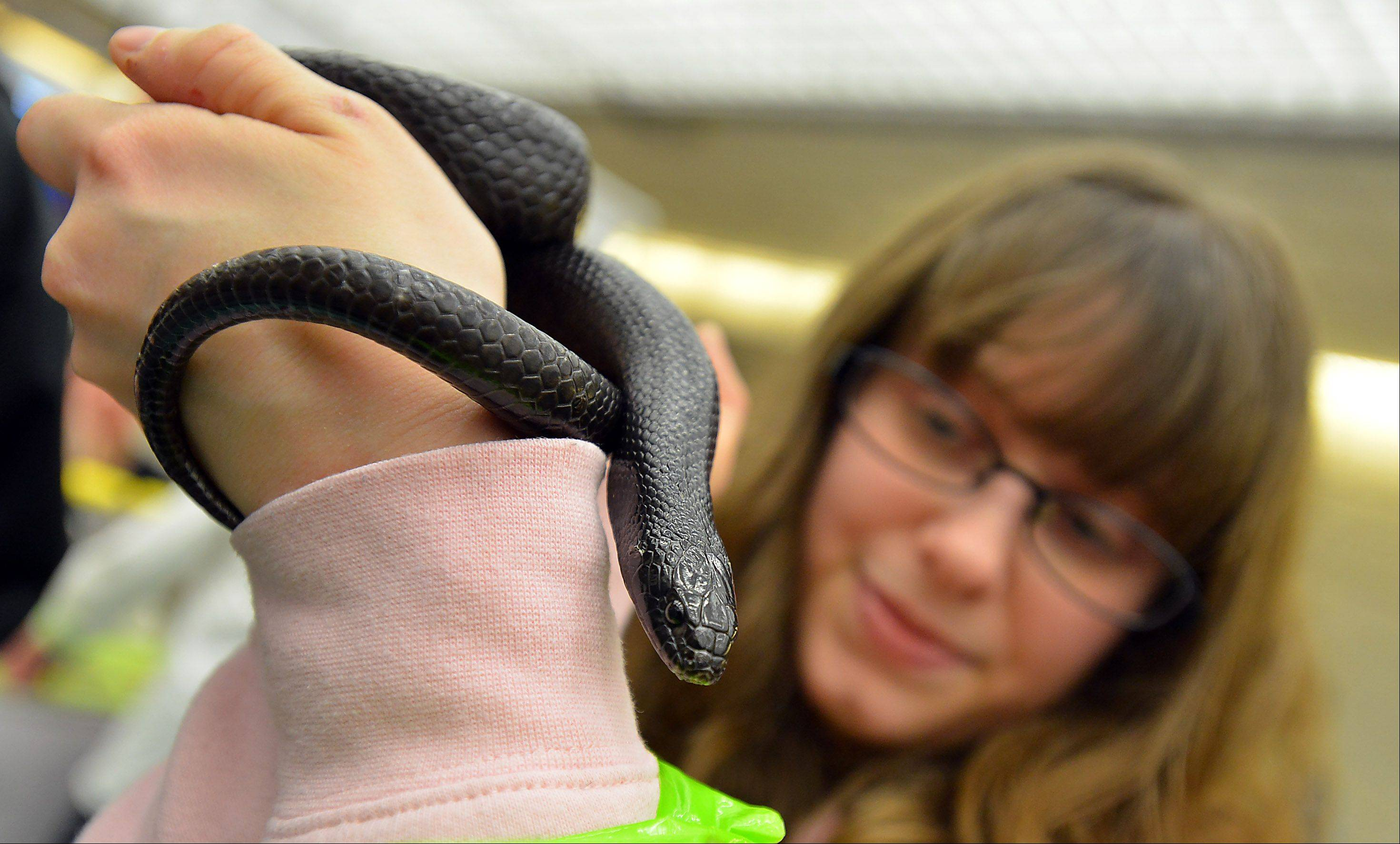 Above, Tracie Nauertz, 23, of Carol Stream gets hands-on experience with a Mexican black king snake on Friday at the 21st annual Chicagoland Family Pet Expo at Arlington Park racecourse in Arlington Heights.