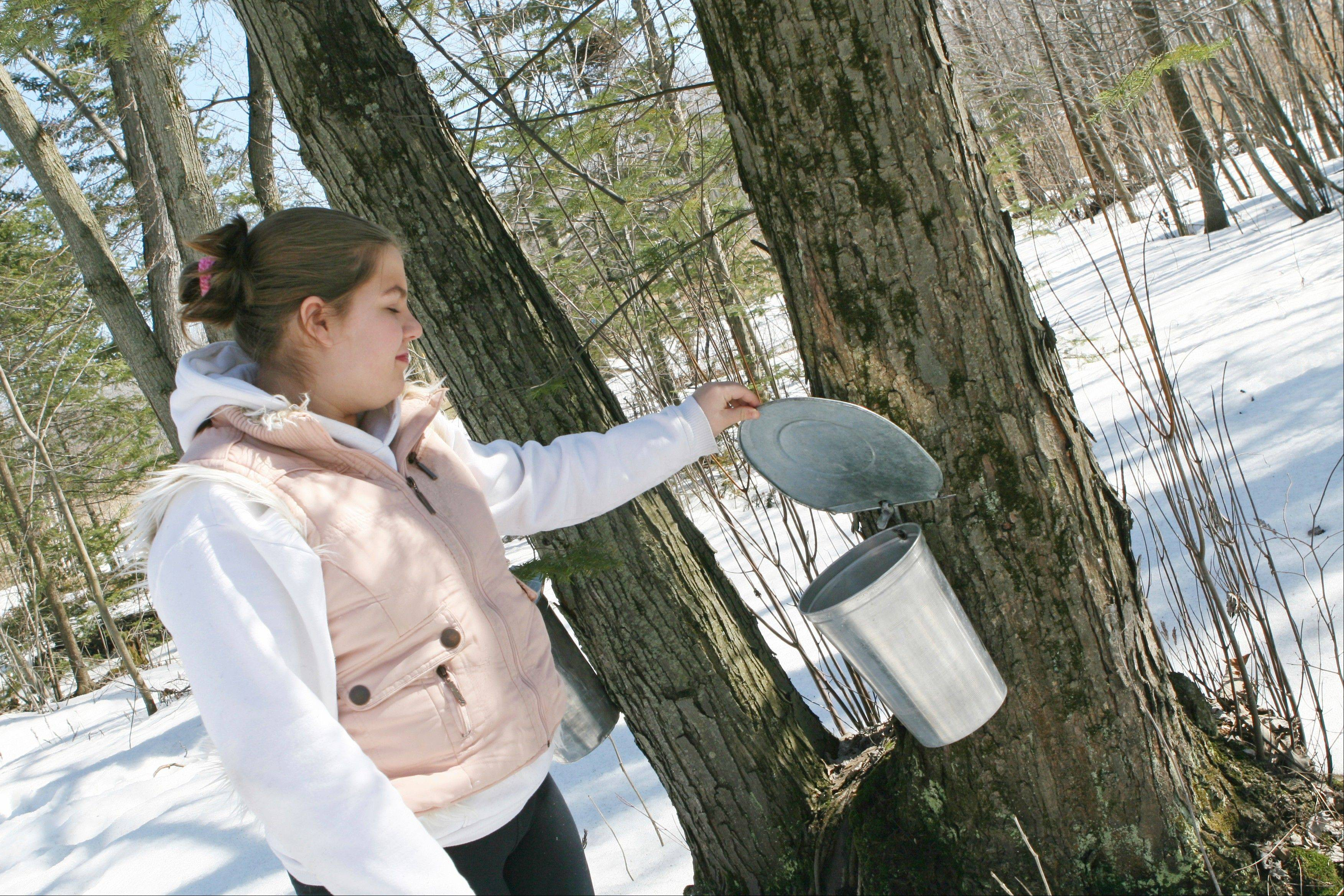 Take a one-hour hike to learn how the sap of maple trees becomes maple syrup at the Maple Syrup Hike in Ryerson Woods in Riverwoods.
