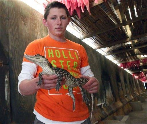 Jhy Neal shows a baby alligator at Savoie's Alligator Farm in Cut Off, La.