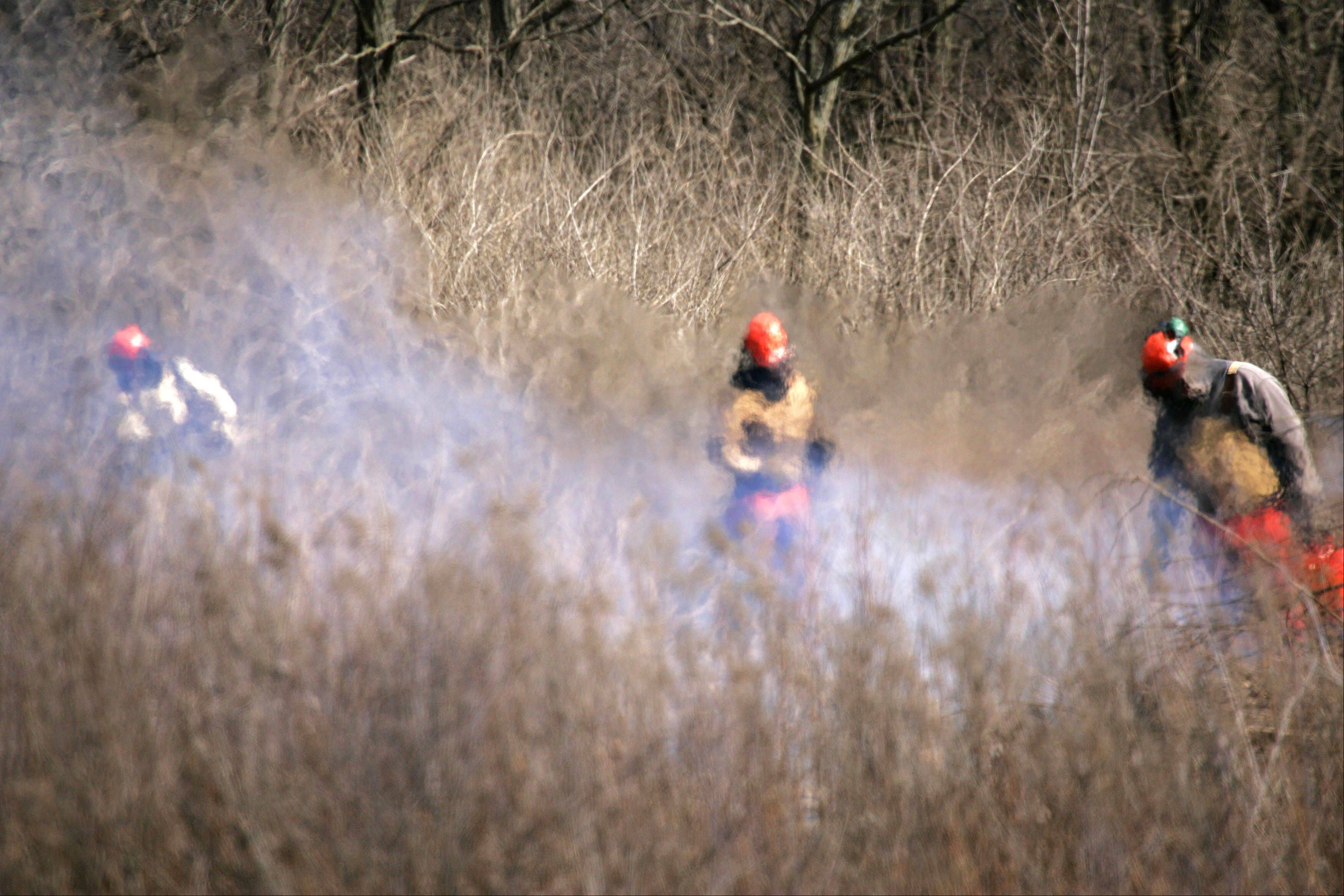 Seen through waves of heat, Restoration Ecologist Benjamin Haberthur and part of his team of five from the Kane County Forest Preserve District, removes some of the non-native plant species from the Leroy Oakes Forest Preserve in St. Charles Tuesday. The team, which is responsible for more than 10,000 acres, worked on clearing about six acres of honeysuckle and buckthorn at the St. Charles park.