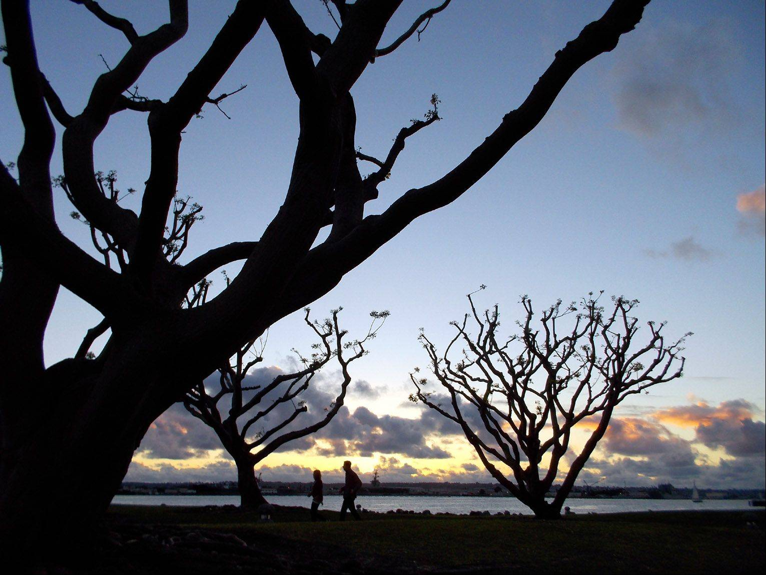 These sculptural coral trees provide an interesting silhouette against the sunset at Seaport Village in San Diego.