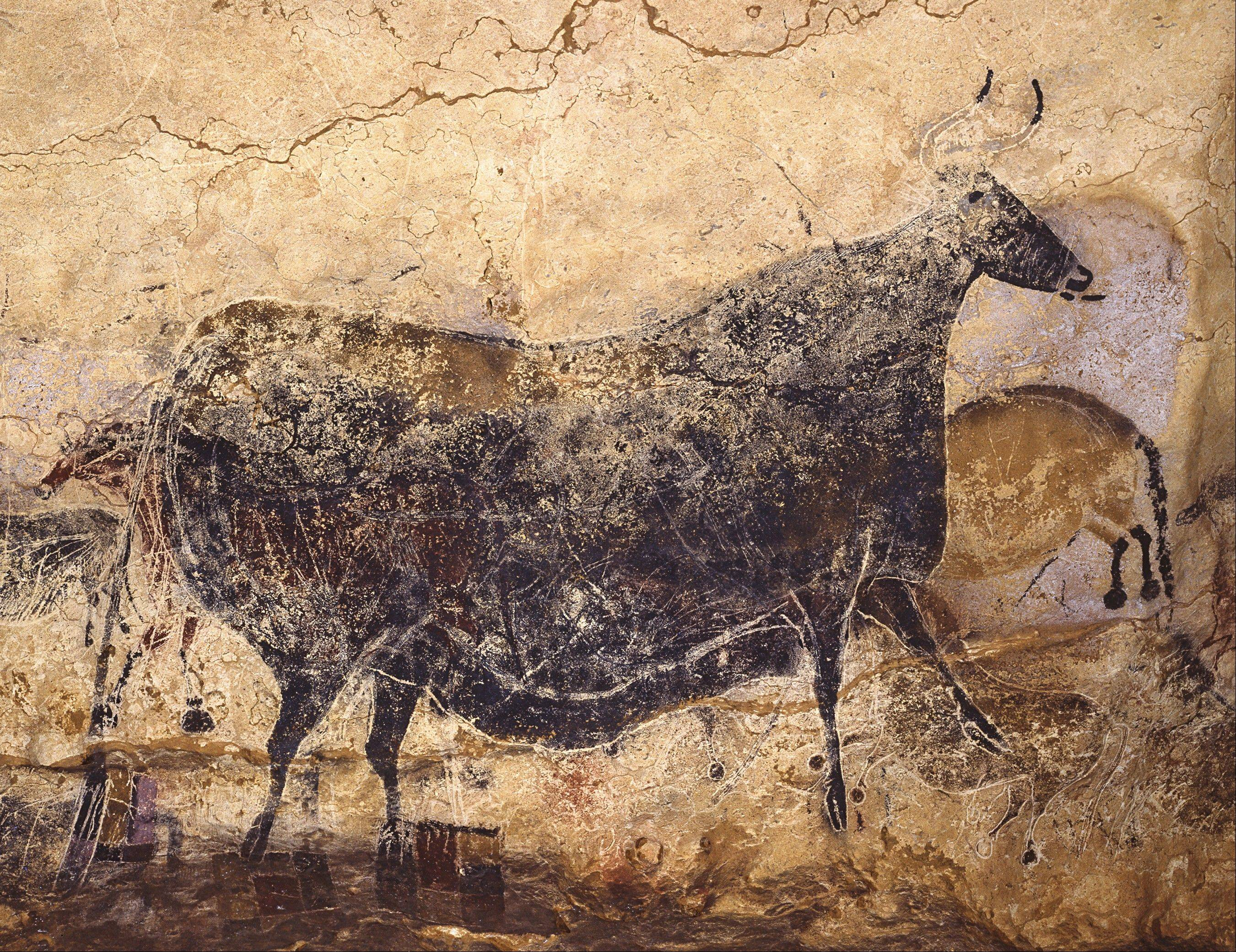 The black cow, found in Lascaux's main gallery illustrates the way the cave was not simply painted once and left, but painted, and repainted over generations. Behind the black cow, you can see traces of other animals that were since painted over.