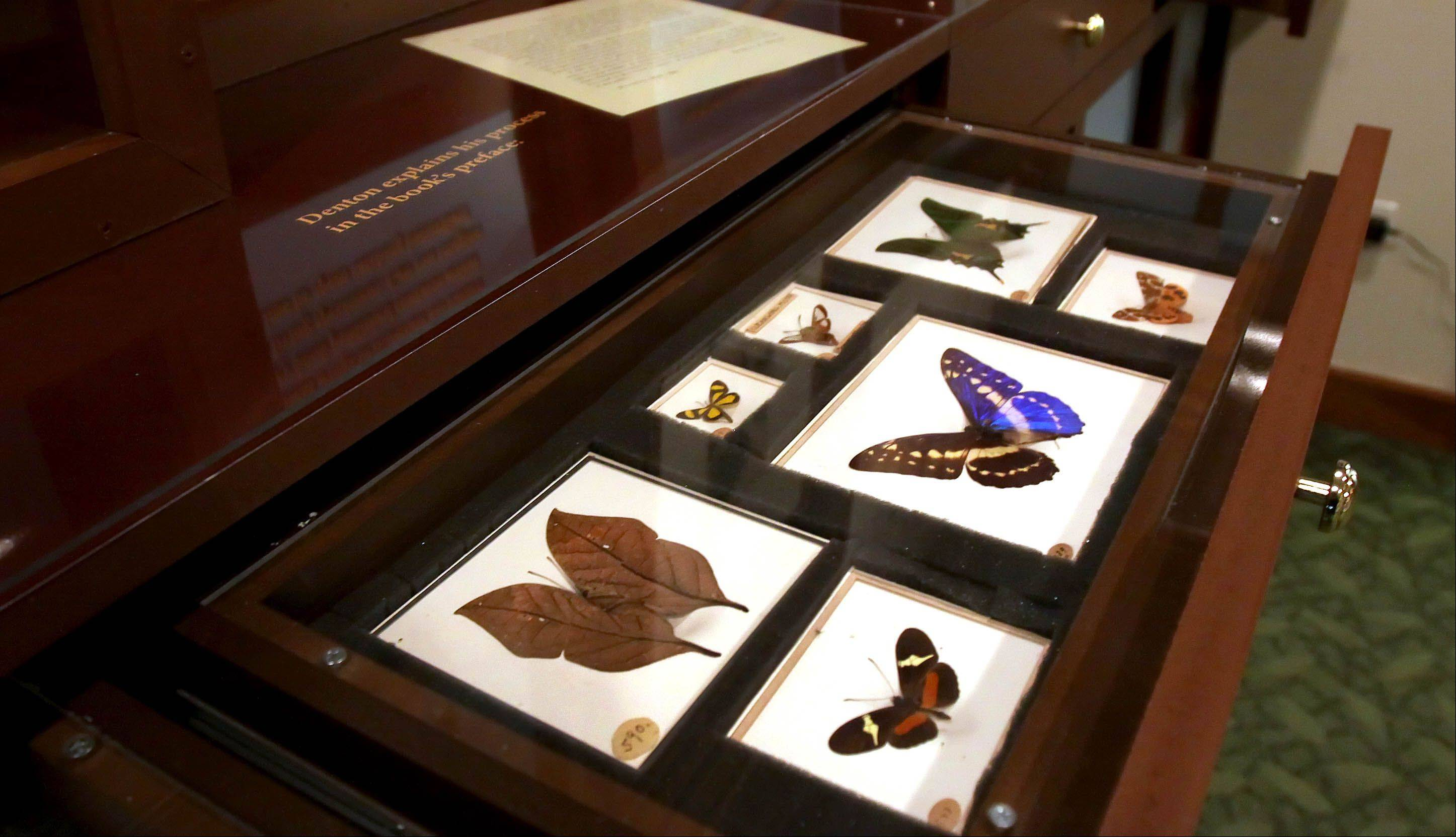 These colorful and well-preserved butterflies and moths are part of a collection put together and sold by artist and nature writer Sherman F. Denton.