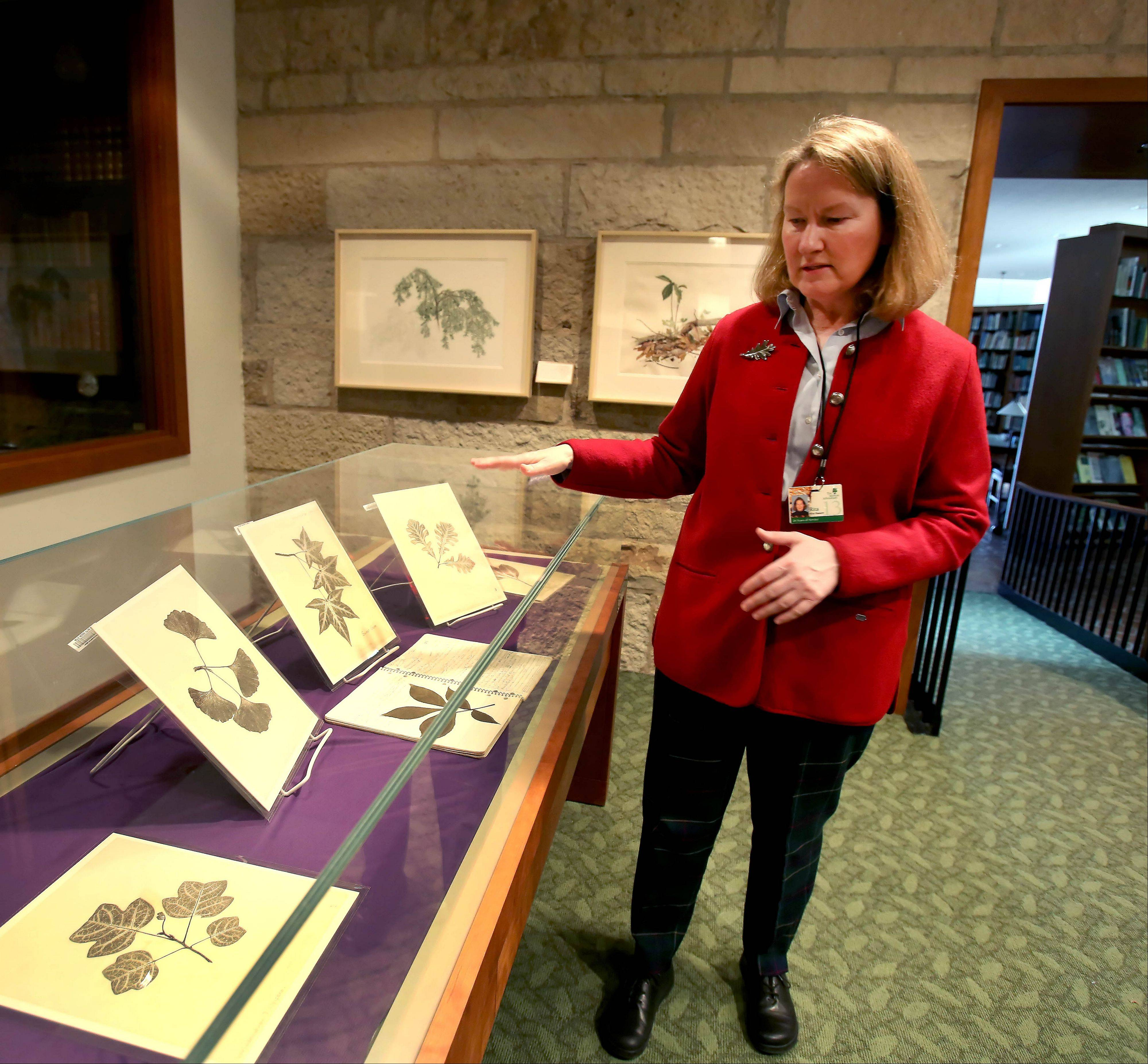 Rita Hassert, collections manager at Sterling Morton Library, shows some of the nature prints done by Alice Thoms Vitale.