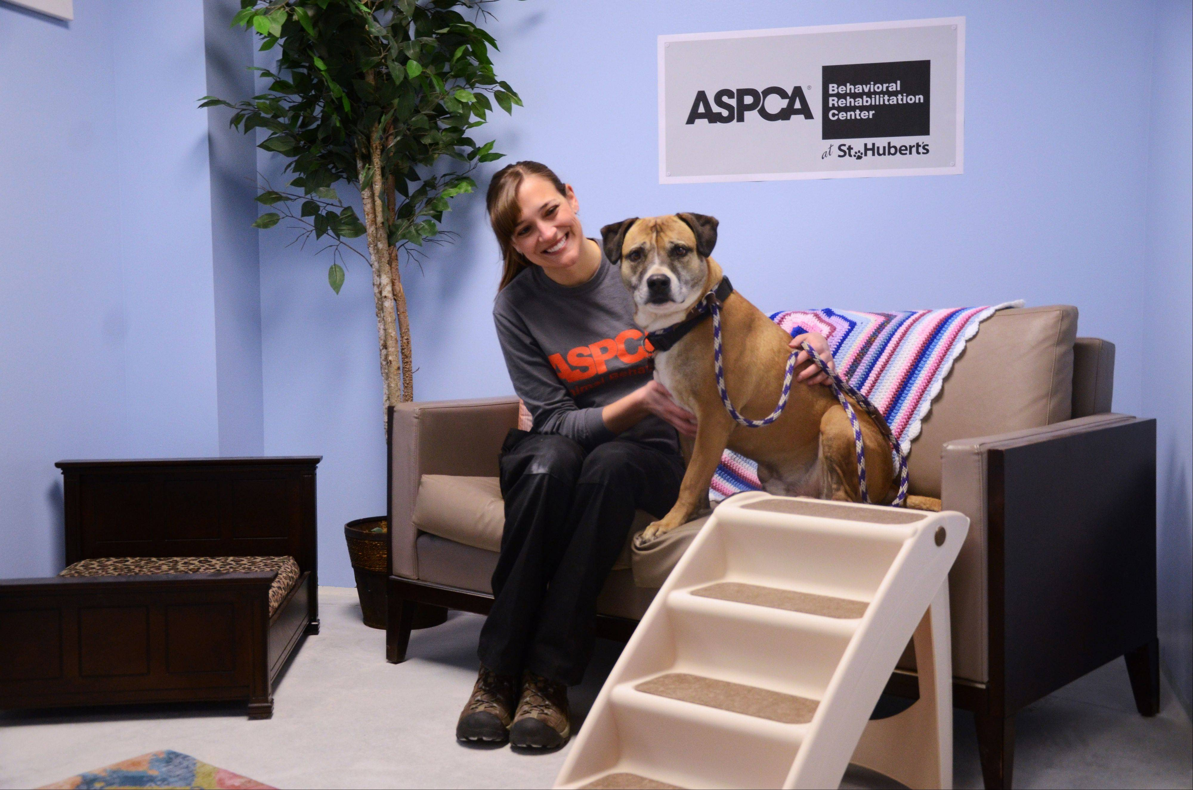 Lauren Zvernia, ASPCA animal behavior enrichment coordinator, works with Musketeer, a 5-year-old Shepard-pit bull mix, in one of the real life rooms at the ASPCA Behavioral Rehabilitation Center in Madison, N.J.