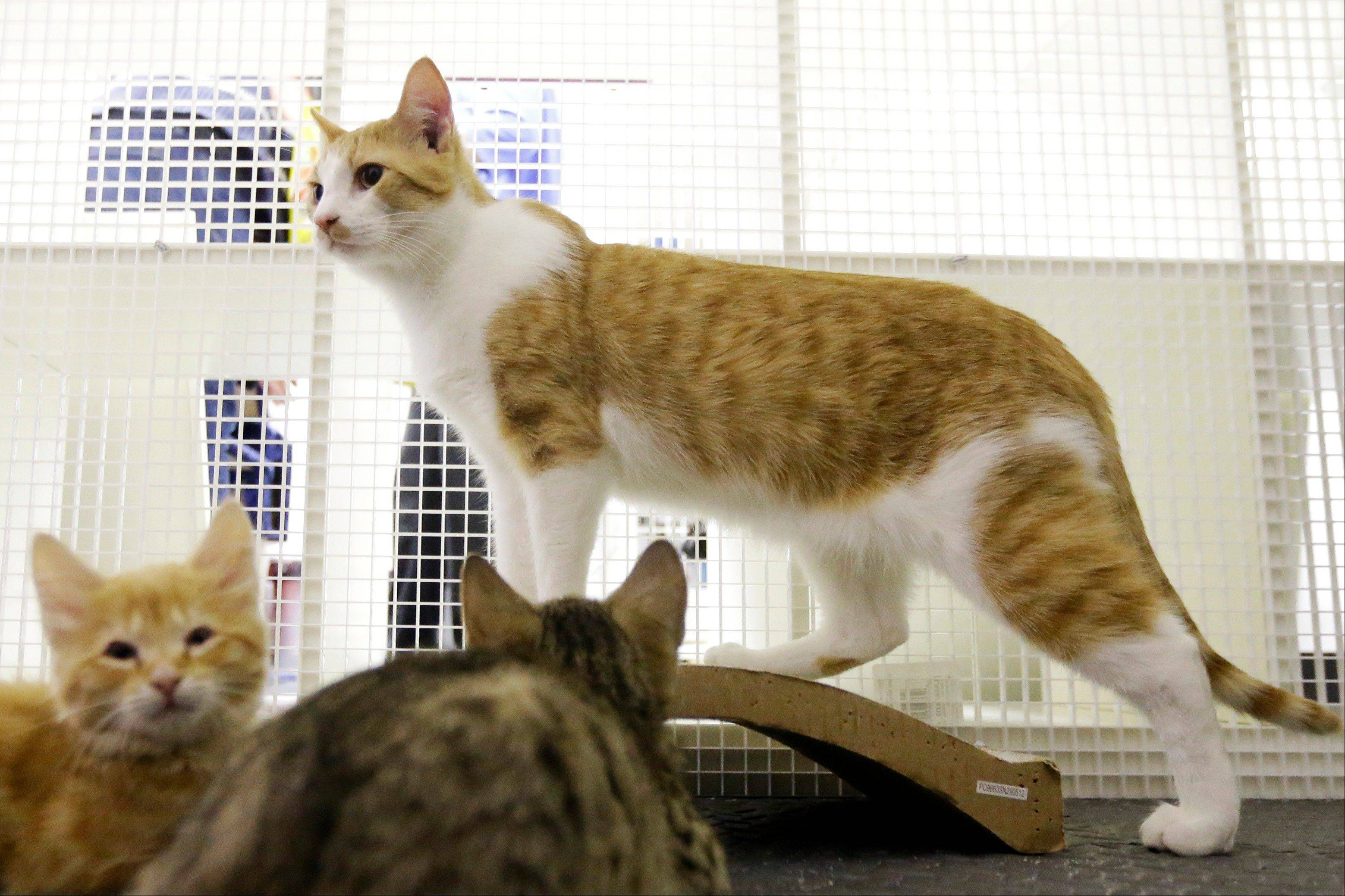 A cat and kittens who were displaced due to fires are seen Thursday, March 28, at Red Paw's adoption facility in Philadelphia. The emergency relief service Red Paw has paired with the local Red Cross to care for animals displaced by flames, floods or other residential disasters.