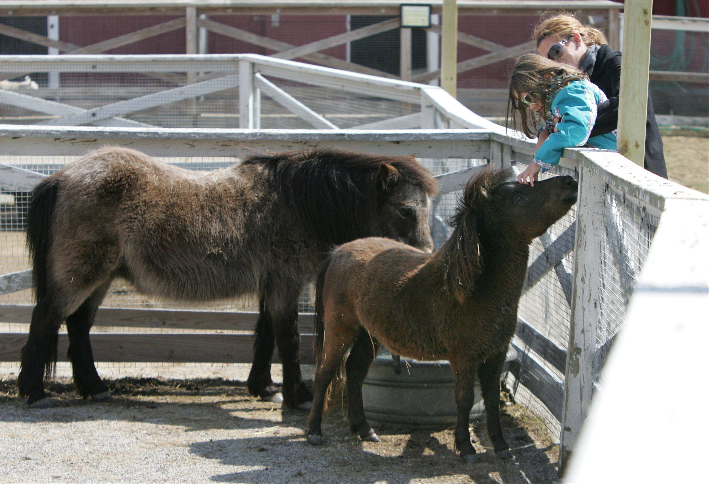 Anastasia Paras, of Chicago, holds her niece, Evalyn Moseley, 6, of Libertyville, as they pet a miniature horse named Levi at Lambs Farm Farmyard in Libertyville on Easter Sunday. This was opening weekend for the outdoor farm and miniature golf.