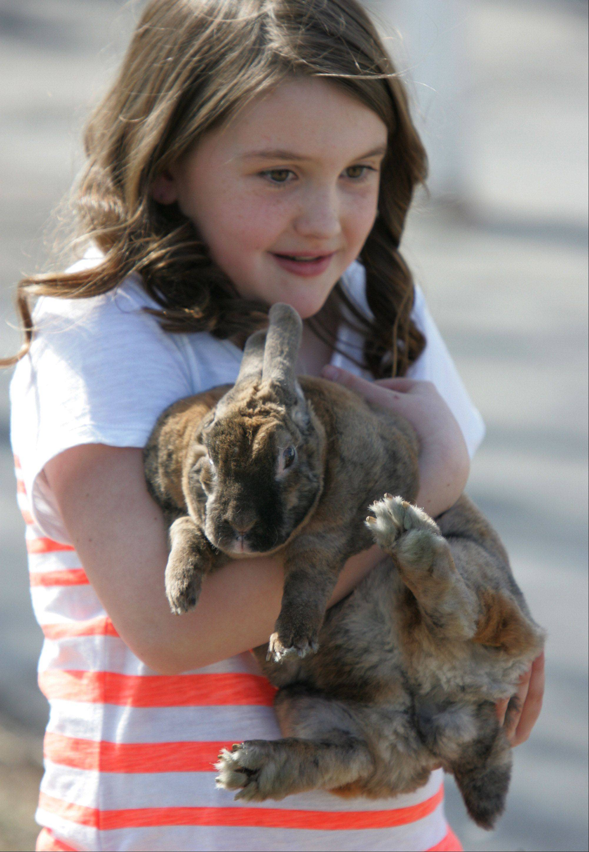 Chloe Crom, 9, of Island Lake, holds Cinnamon Bun, a rabbit, after the Easter egg hunt at Long Grove Community Church on Easter Sunday. Several rabbits were brought to the church for the children to hold and pet.