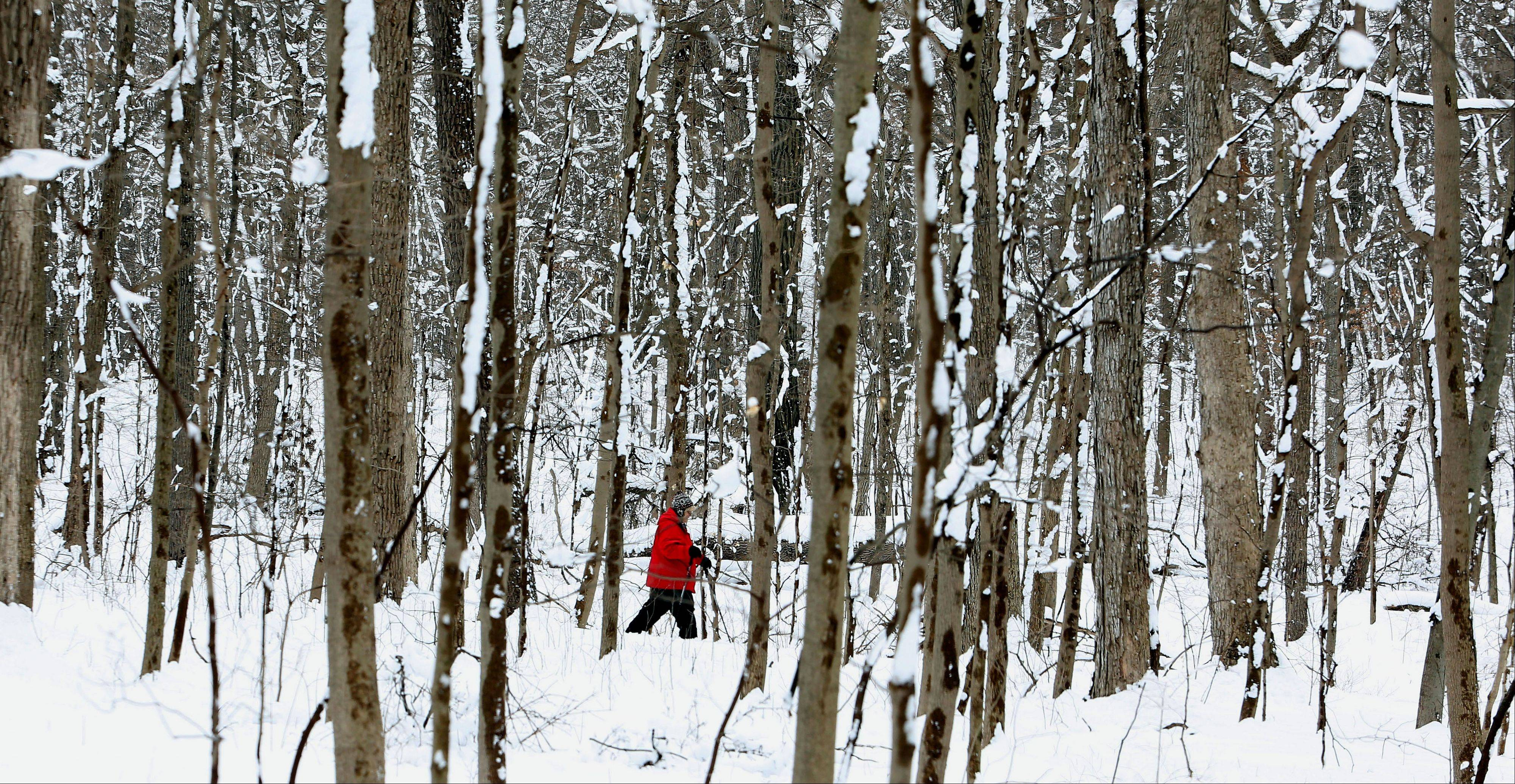 A woman in her red coat walking through the snow-covered trees in Morton Arboretum in Lisle recently caught my eye. The trees were beautiful by themselves, but a spot of color through them make the photo a little more interesting.