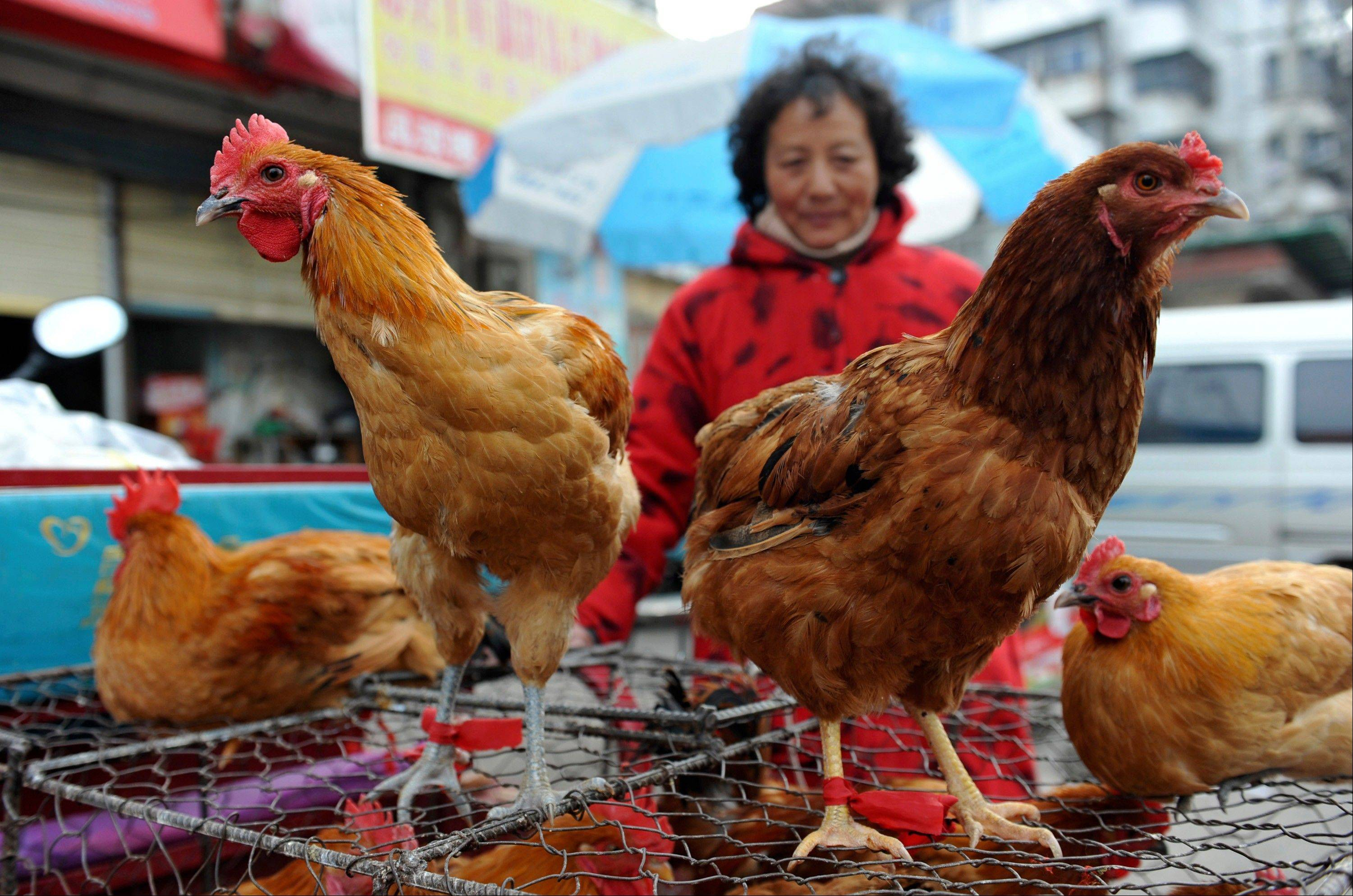A vendor waits for customers near chicken cages at a market in Fuyang city, in central China's Anhui province, Sunday. Two Shanghai men have died from a lesser-known type of bird flu in the first known human deaths from the strain, and Chinese authorities said Sunday that it wasn't clear how they were infected, but that there was no evidence of human-to-human transmission. A third person, a woman in the nearby province of Anhui, also contracted the H7N9 strain of bird flu and was in critical condition, China's National Health and Family Planning Commission said in a report on its website.