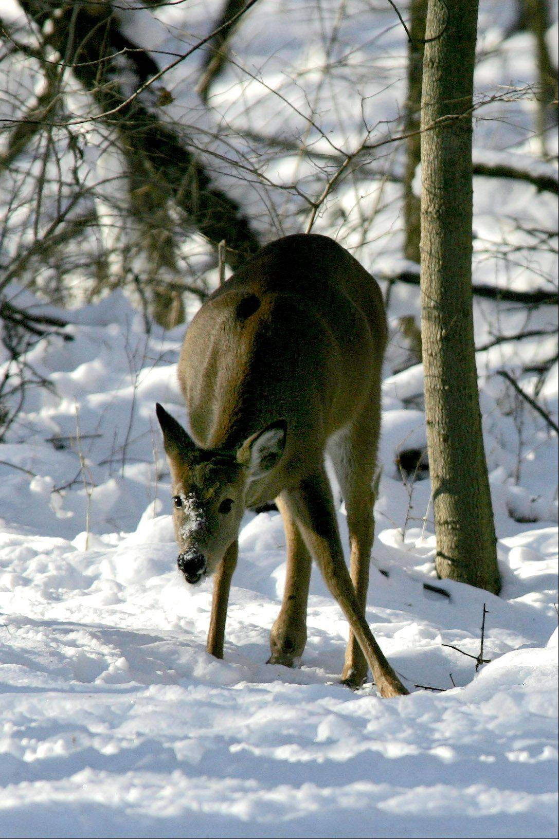 DuPage County Forest Preserve officials say they will closely monitor the deer population to ensure a recent case of chronic wasting disease was an isolated incident.