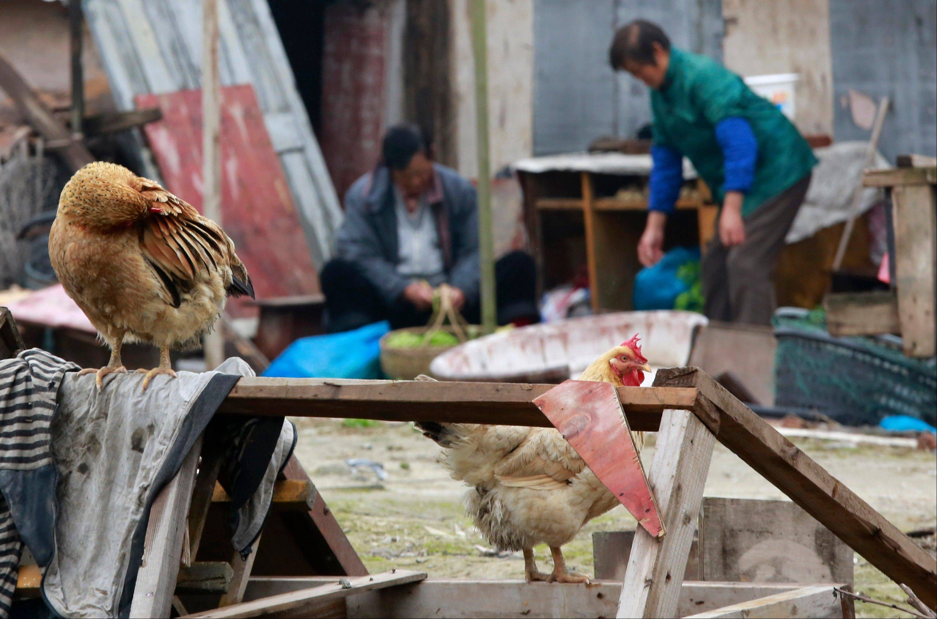 Free-range chickens are seen in Shanghai, China, on Friday, April 5, 2013. China announced a sixth death from the new bird flu H7N9 strain Friday, while authorities in Shanghai halted the sale of live fowl and slaughtered all poultry at a market where the virus was detected in pigeons being sold for meat. The first cases were announced Sunday.
