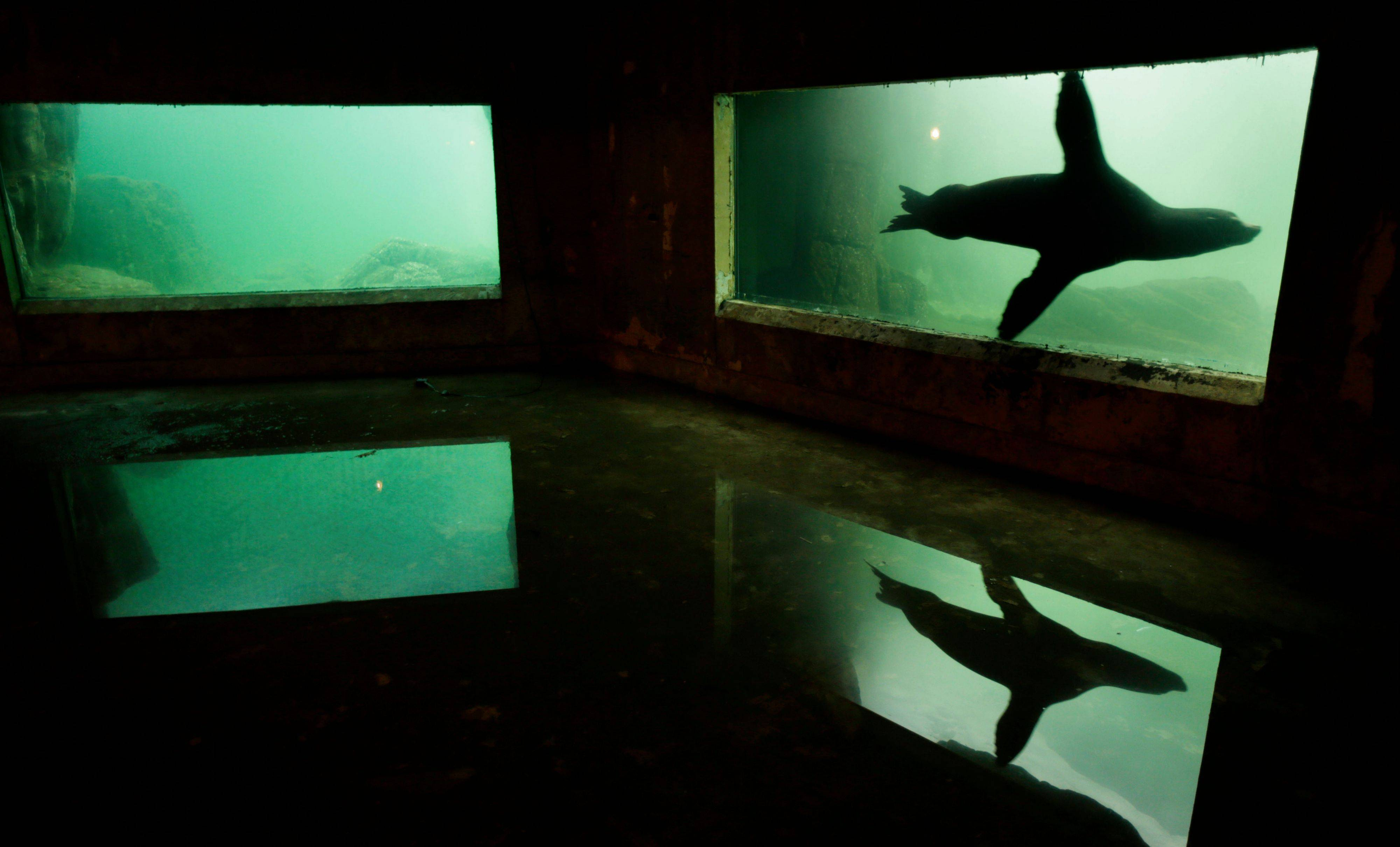 A sea lion is reflected in a puddle of water on the floor of an exhibit flooded to the ceiling during Superstorm Sandy at the Wildlife Conservation Society's New York Aquarium on Coney Island.