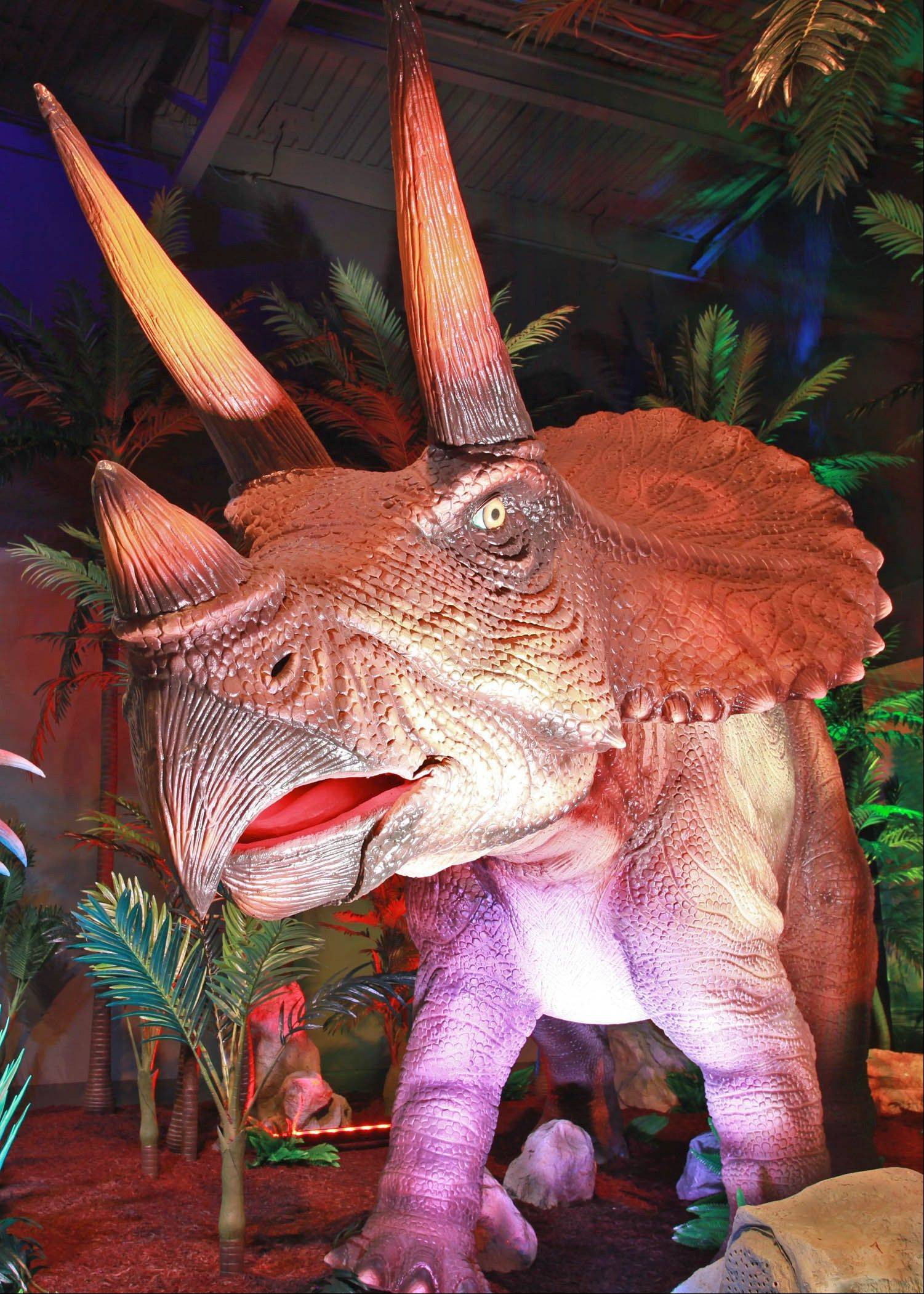 On Saturday, April 6, Brookfield Zoo welcomes back 24 animatronic dinosaurs, such as this Triceratops, in the return visit of its Dinosaurs Alive! exhibit.