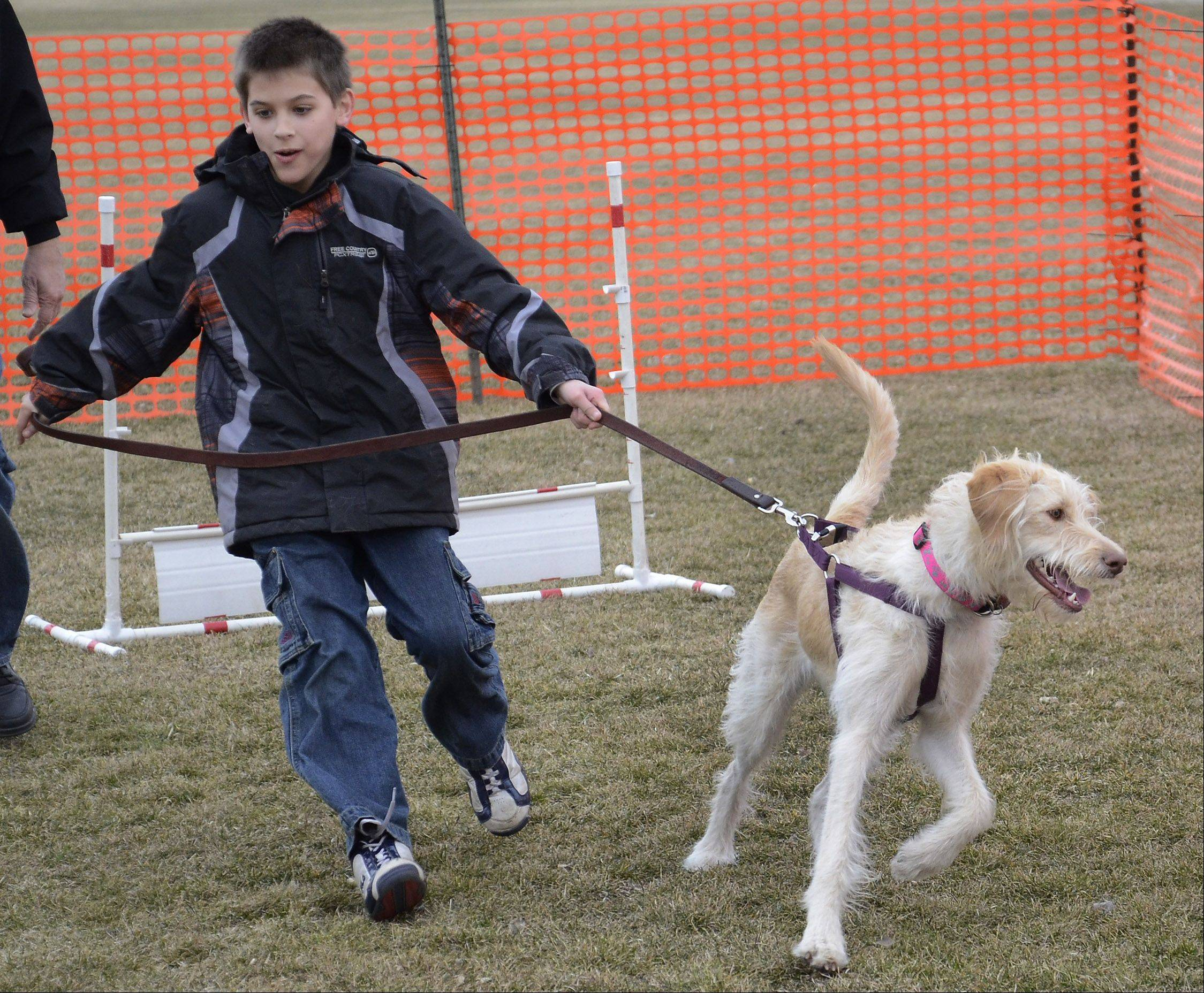Tristan Elkin of Schaumburg has a firm grip on his Labradoodle Sadie while on the obstacle course during the Canine Carnival at the Meineke Recreation Center in Schaumburg.