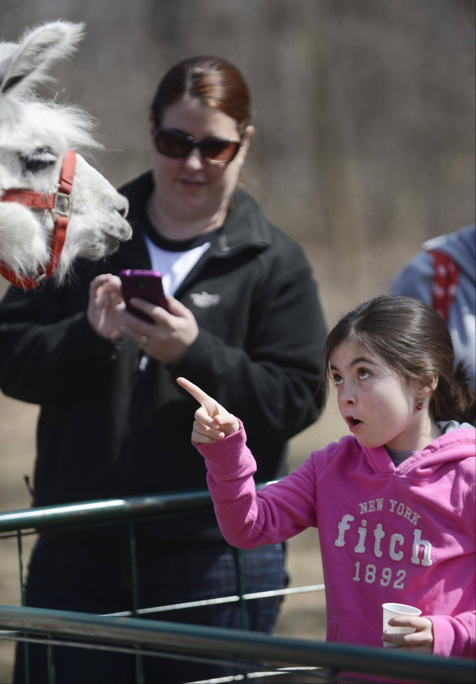 Caitlyn Jones, 8, tells a llama how to behave Sunday at the Fox Valley Wildlife Center in the Elburn Forest Preserve. The Wild Baby Shower event invited guests to bring animal food and other needed items to the wildlife recovery center. Caitlyn was with her mother Kristen, background, of Geneva.
