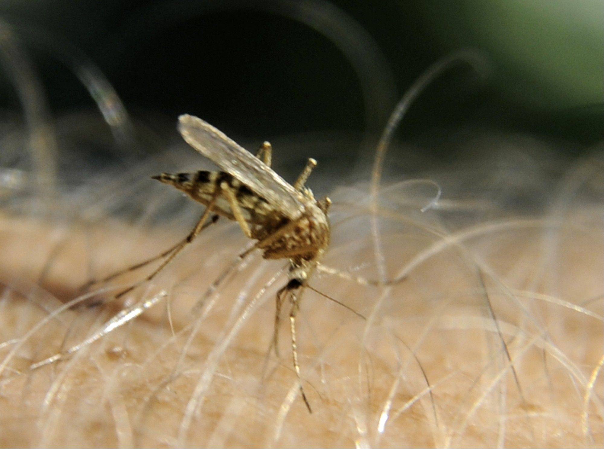 A task force will examine the way DuPage County municipalities, townships and service districts combat mosquitoes and make recommendations on whether changes should be made.