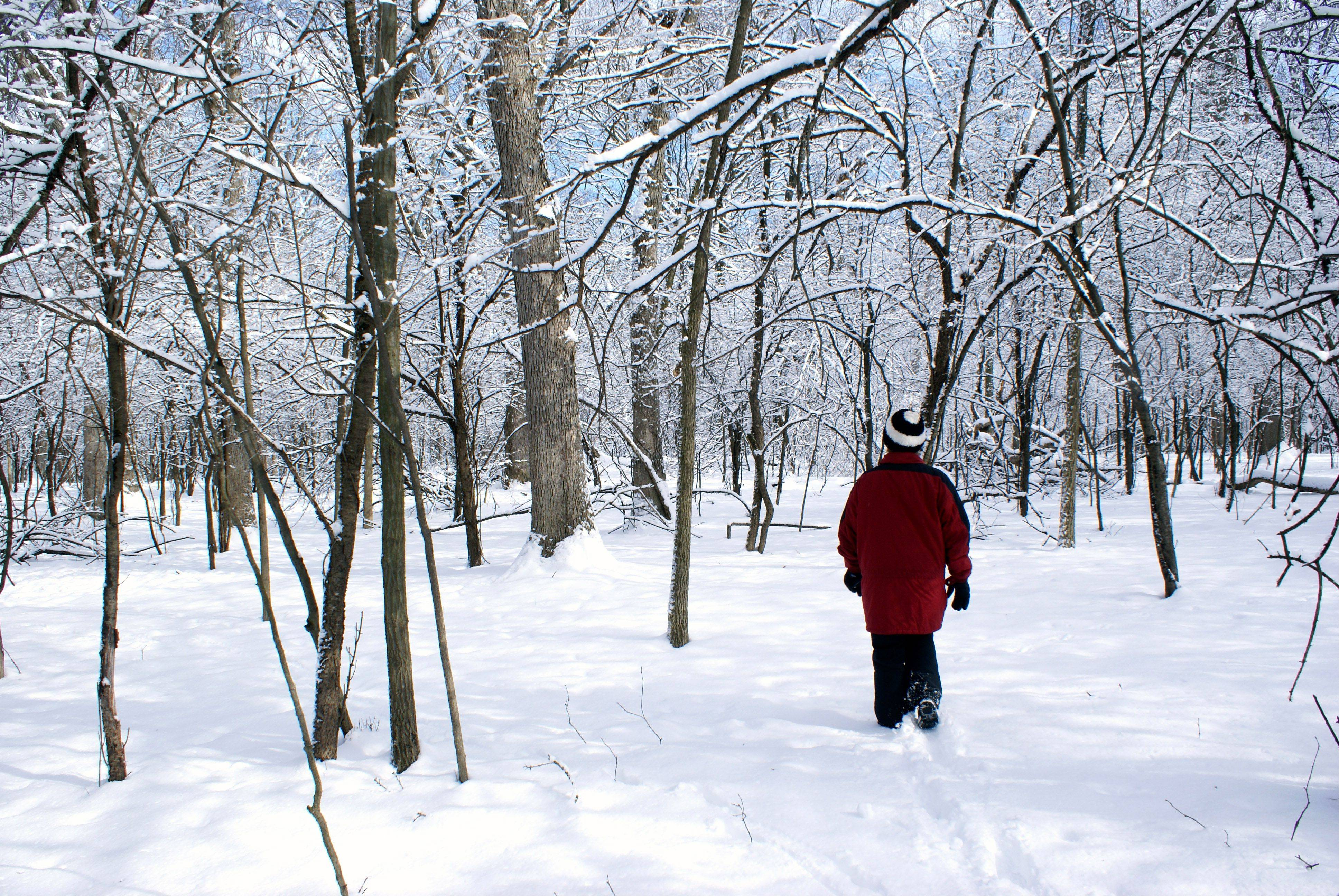 My wife and I were taking a walk in the woods just after the last heavy snowfall last month. Her red jacket really pops out with all the snow.