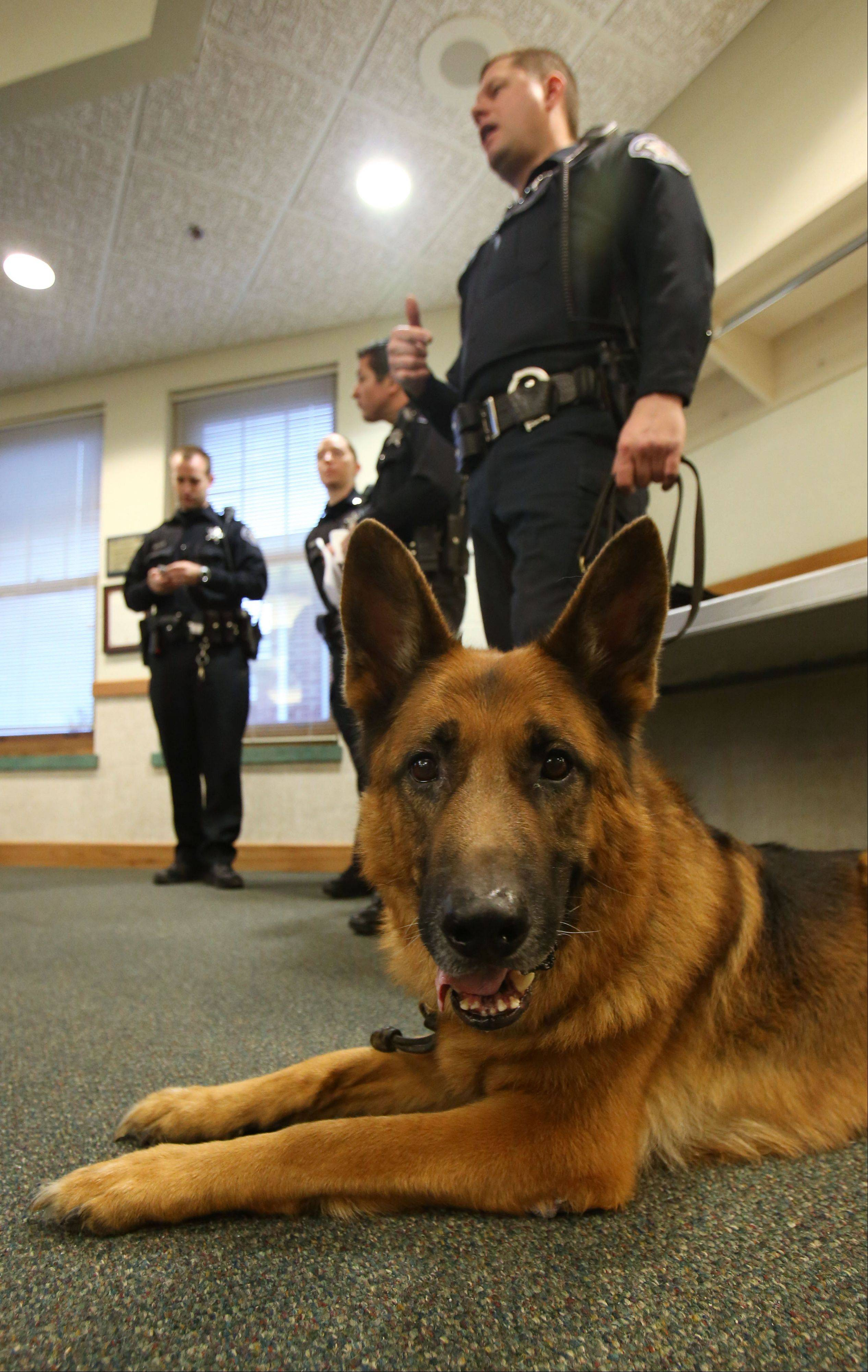 The Village of Round Lake Beach retired K-9 Gunnar from the police department Monday night at village hall. Gunnar has served the village for the last 7 1/2 years, working with handler Officer Ken Rydz. Rydz now takes ownership of Gunnar.