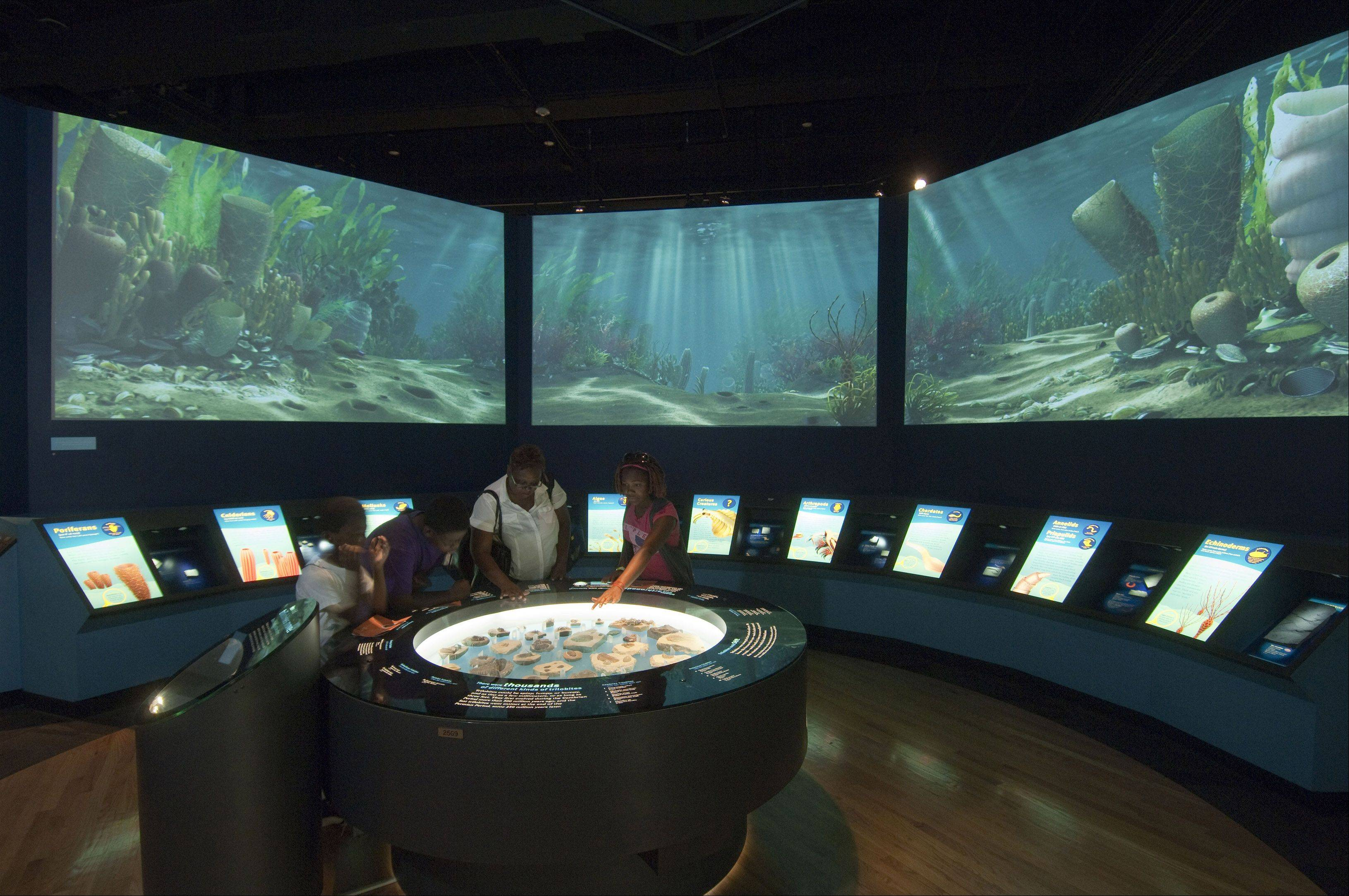 An image of sea life during the Cambrian period, the time spanning 542 million to 488 million years ago when life-forms quickly diversified, is seen in this curved projection surrounding visitors at the Field Museum's Evolving Planet exhibit.