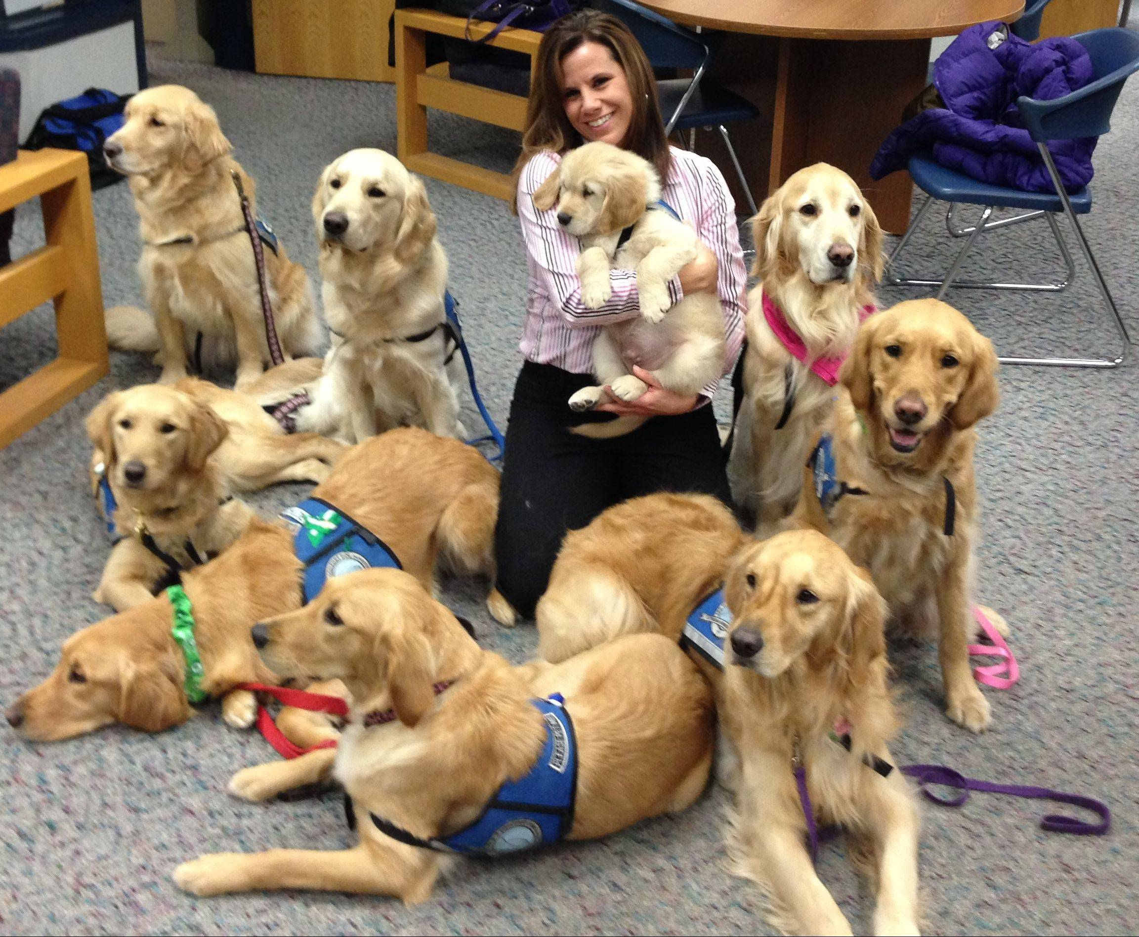 Comfort dogs sent by Addison-based Lutheran Church Charities surround Newtown High School counselor Deidre Croce in January. She's holding Isaiah, then a 9-week-old puppy in training.