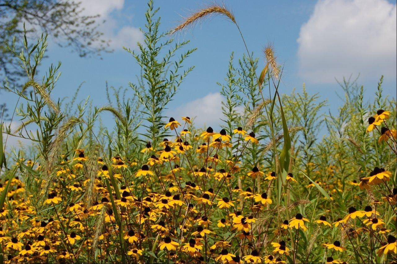 "Learn about the benefits of native plantings, and take a bird walk at the ""Wings and Wildflowers"" event at Cantigny Park in Wheaton."