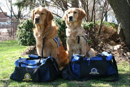 Golden retrievers Luther and Ruthie, members of the Addison-based K9 Comfort Dogs Ministry, on Tuesday were packed and ready to go to Boston.