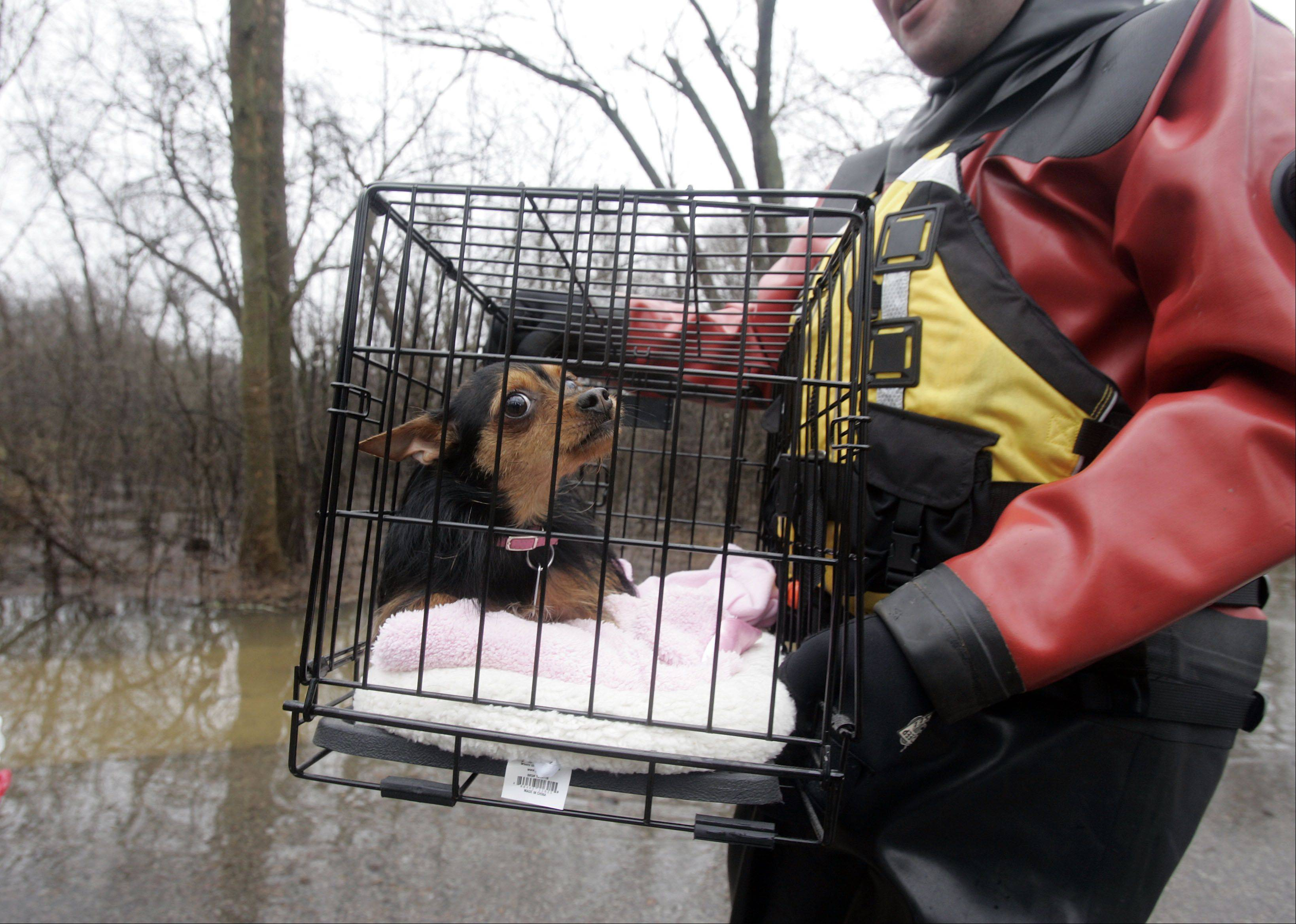 Nick Beauchaine, a firefighter with the East Dundee Fire Protection District, carries a scared Roxi Thursday after he helped the dog's owner, Barrie Komorski, leave her home in the Richardson subdivision.