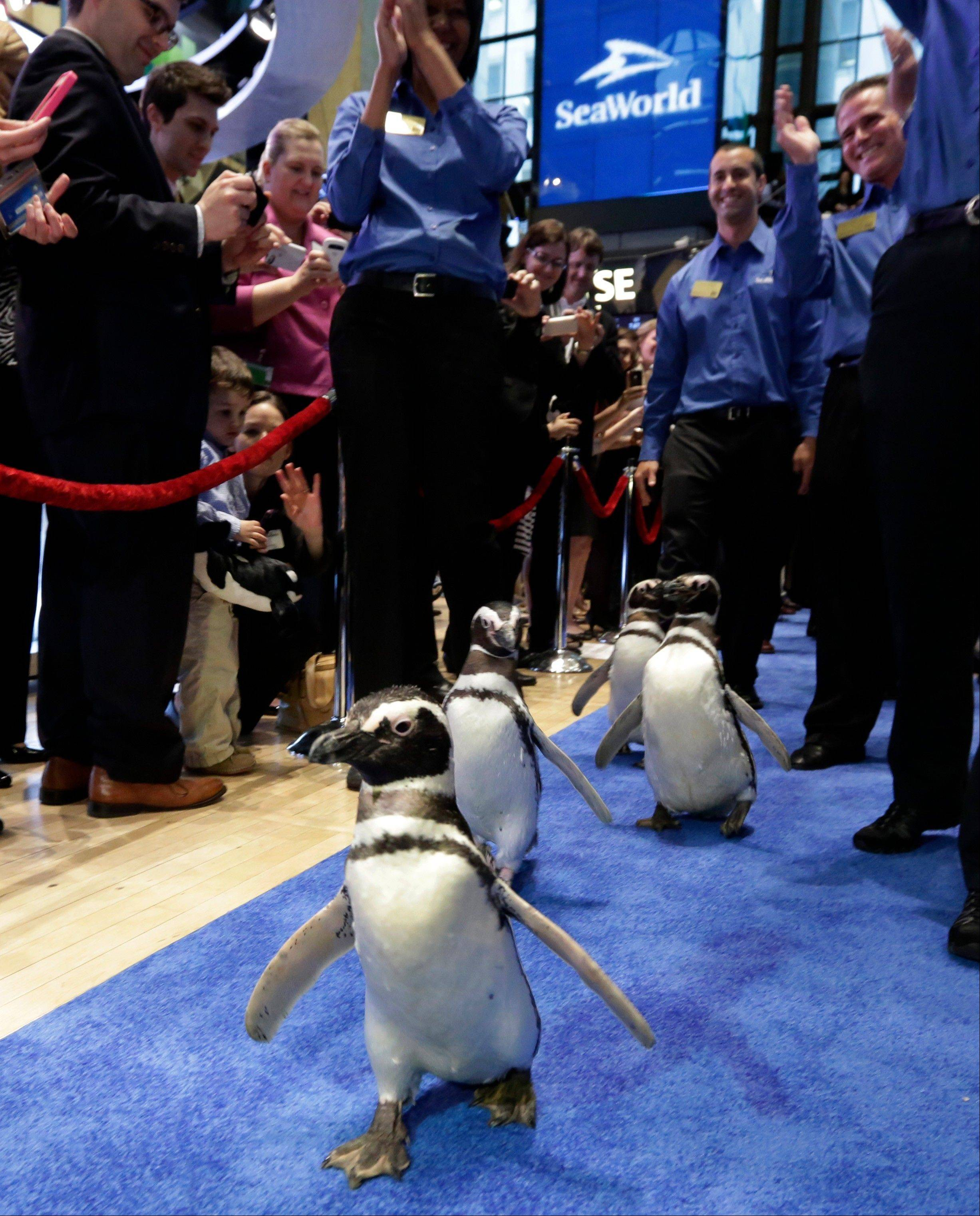 Penguins from SeaWorld are escorted Friday by their handlers on the floor of the New York Stock Exchange during the company's IPO.