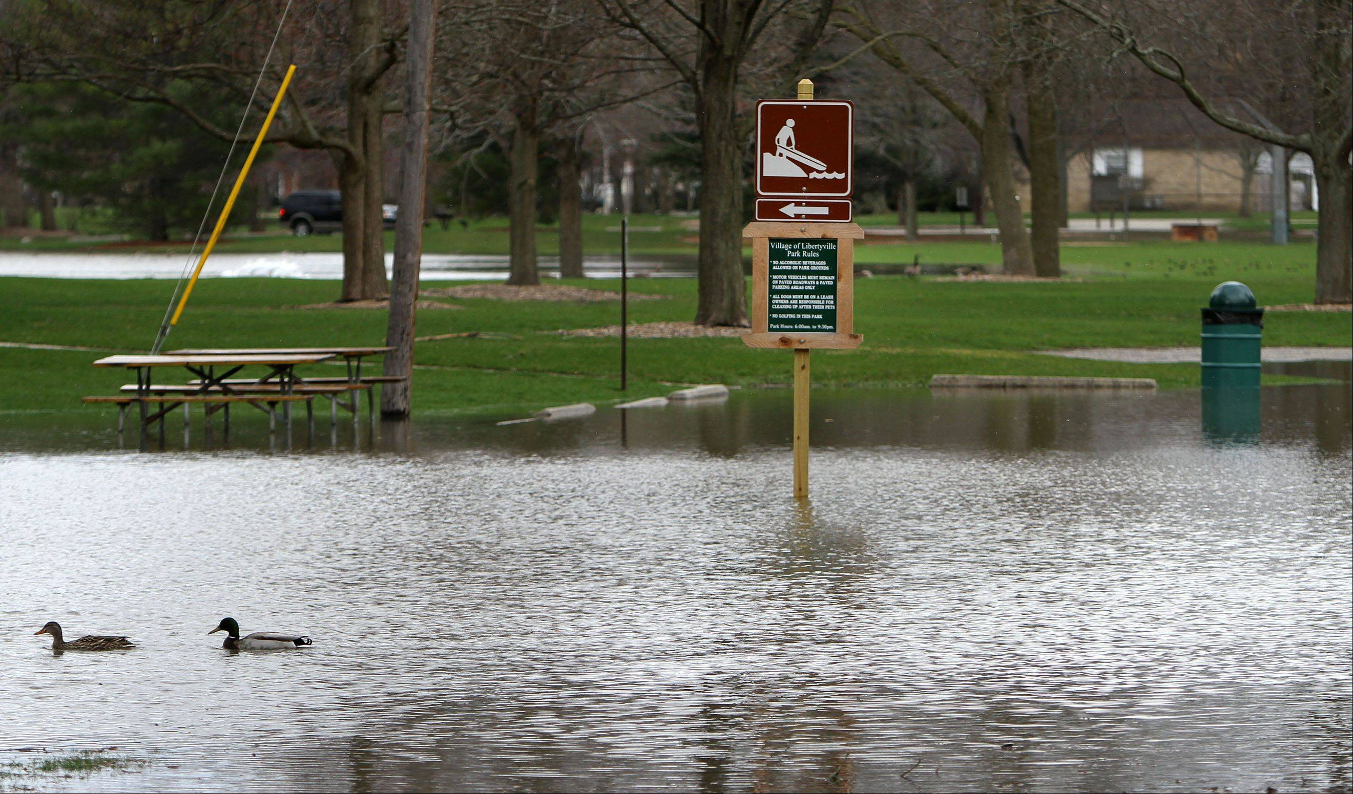 Ducks swim through Riverside Park as the Des Plaines River overflowed it's banks Friday morning in Libertyville.