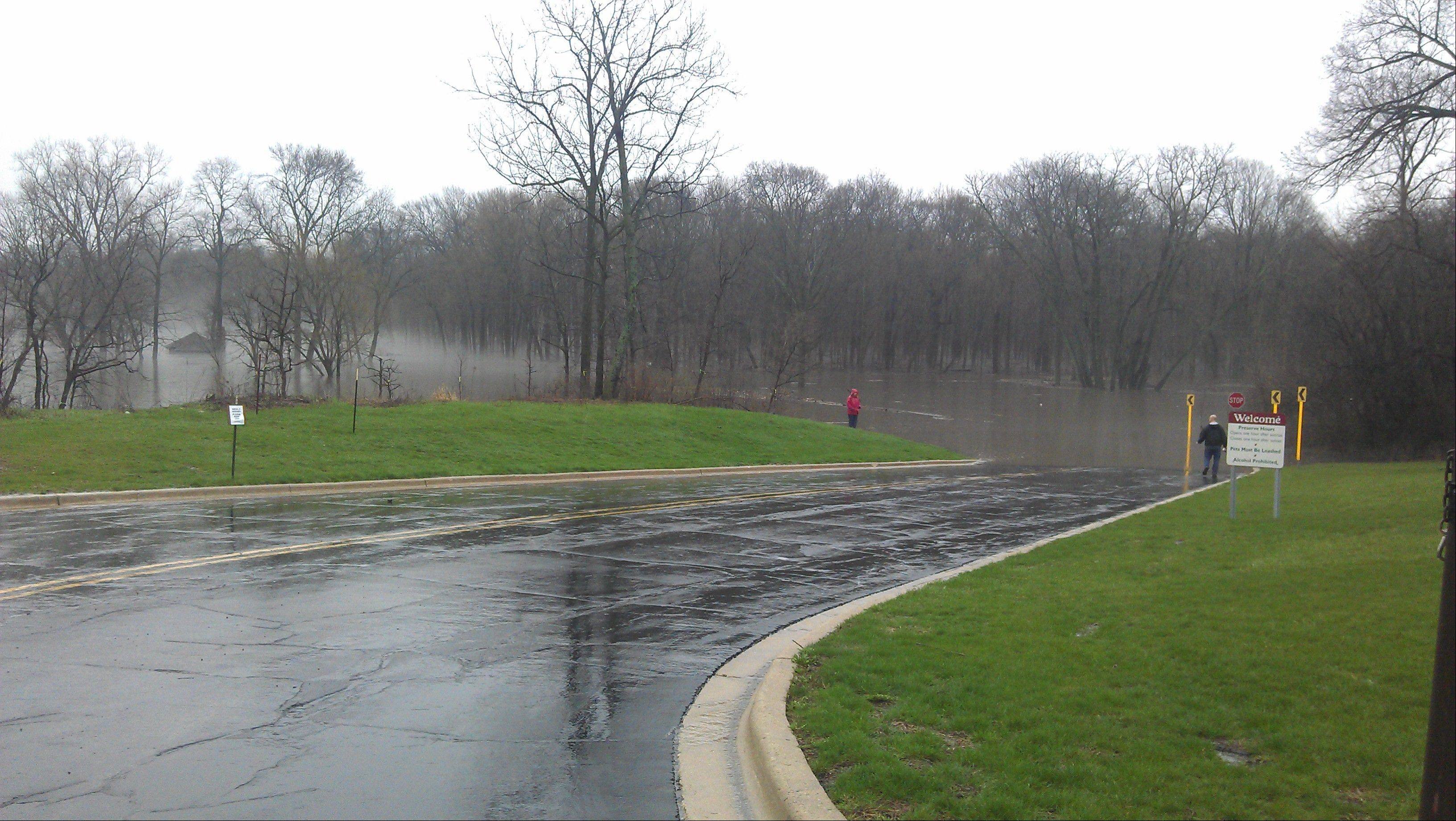 Photo courtesy Dana RexFlooding at the McDowell Forest Preserve.