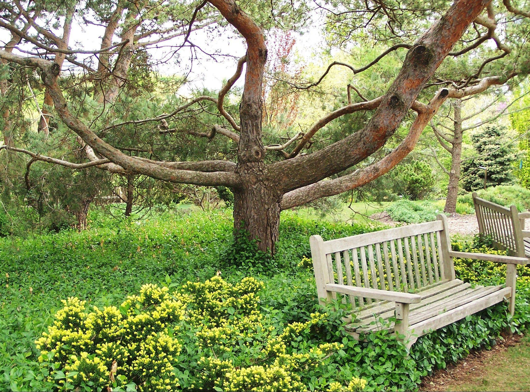 Art in the garden: Put trees first in design plans