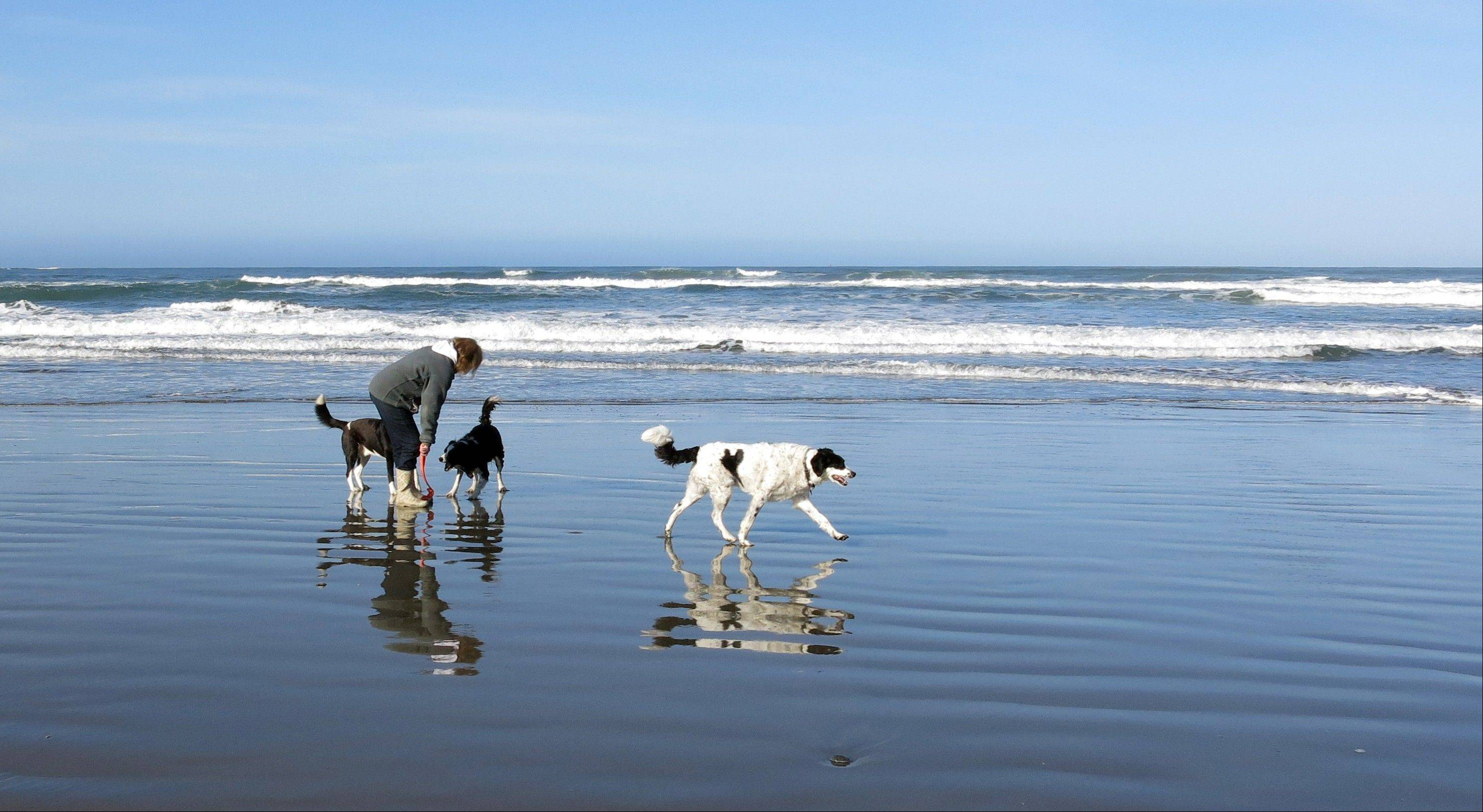 Sue Canfield, and dogs Toby, Pike and Rascal in the surf off the California coastline. Watching as a beloved dog is swept out to sea is heart-wrenching. Doing nothing seems unthinkable. But experts say that is exactly what a dog owner should do.