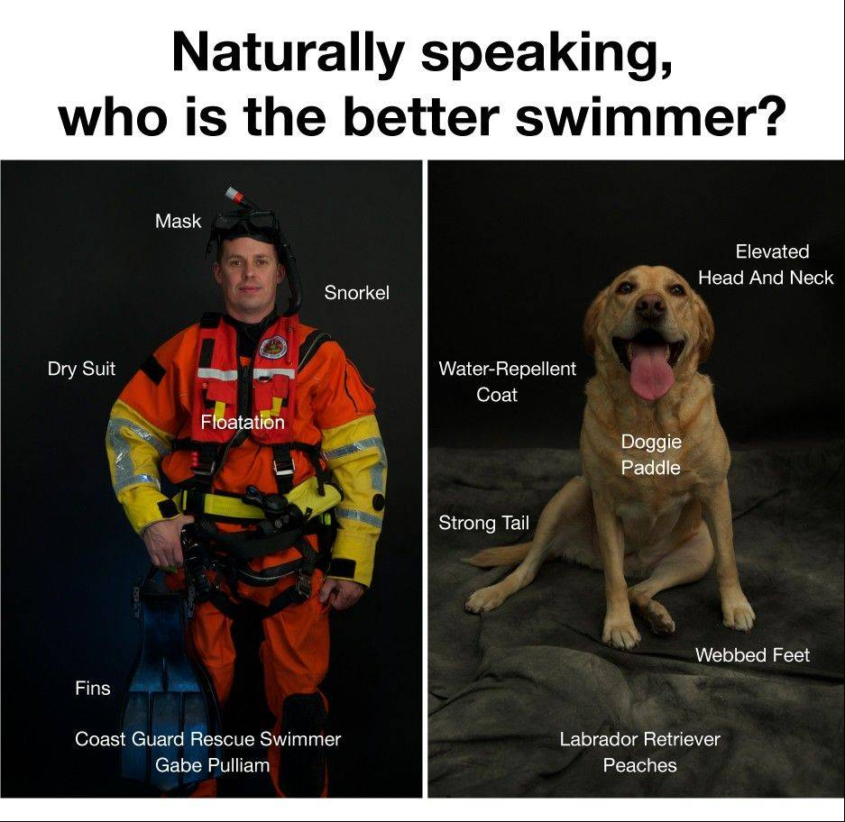 A public service poster created by the U.S. Coast Guard advises swimmers not to attempt to rescue their dogs who get swept away into surf.