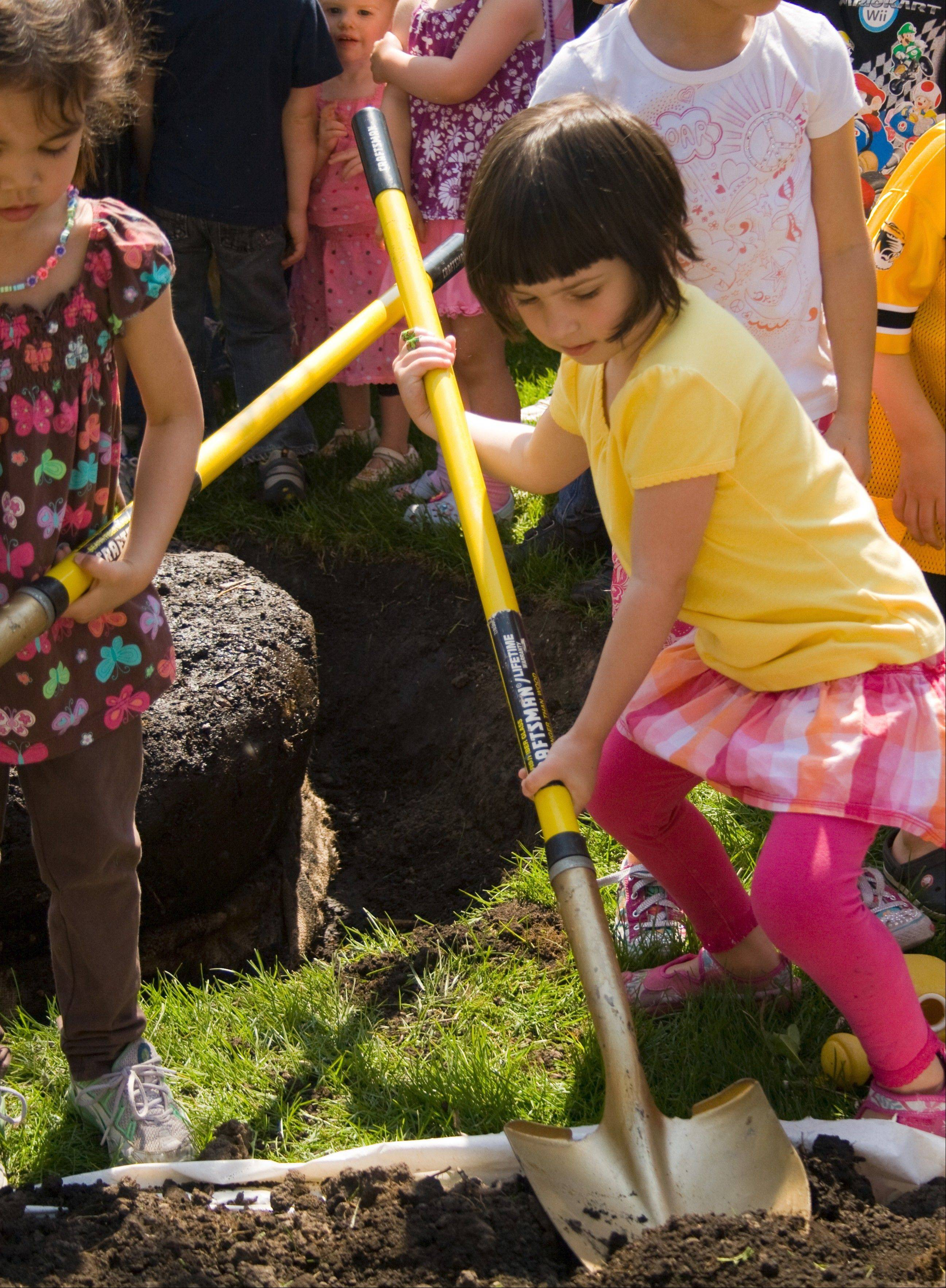 Planting a tree will be one of the activities children can participate in during the Earth Day celebration at the Morton Arboretum.