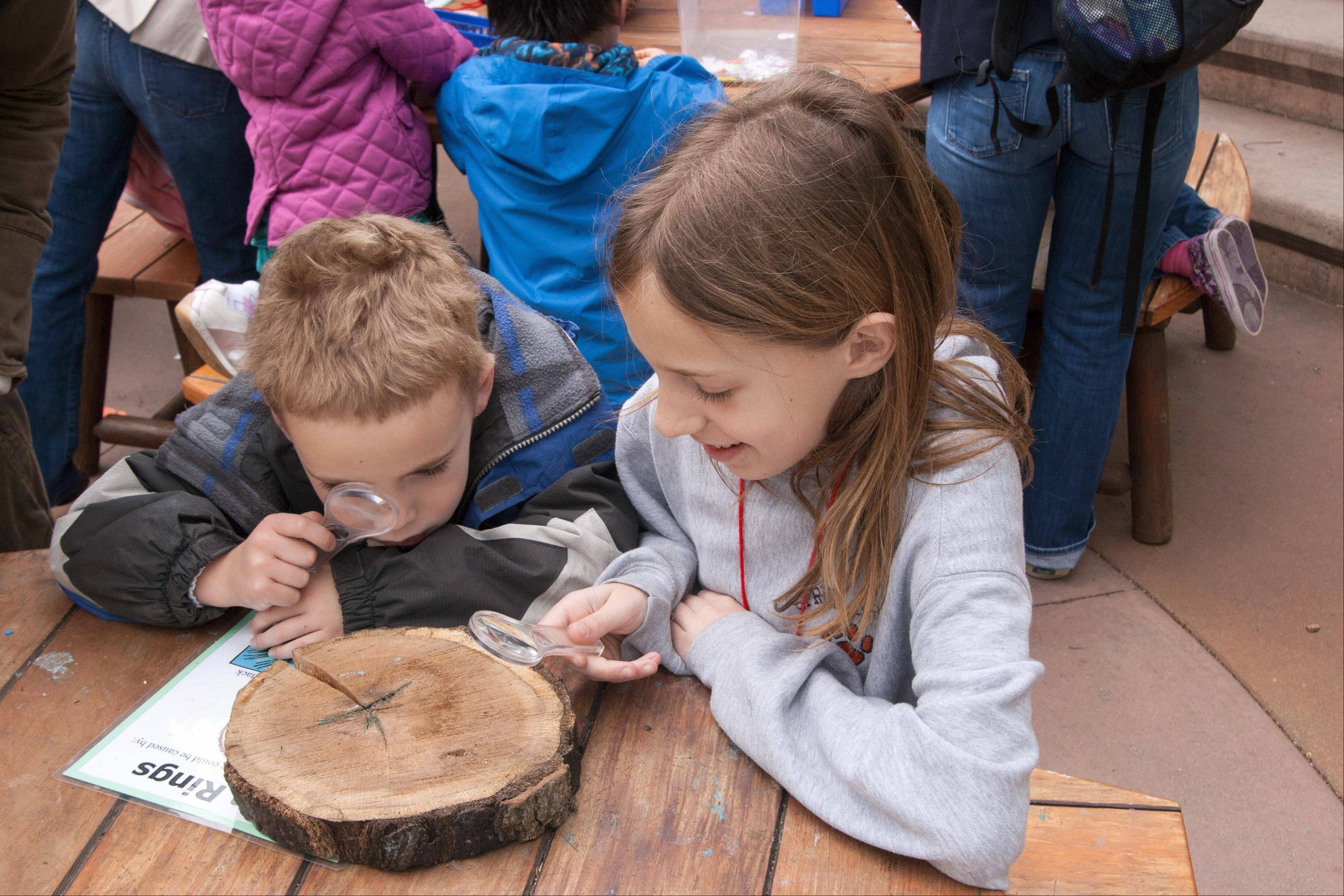 Young visitors can study trees as part of special Earth Day programs at Morton Arboretum in Lisle.