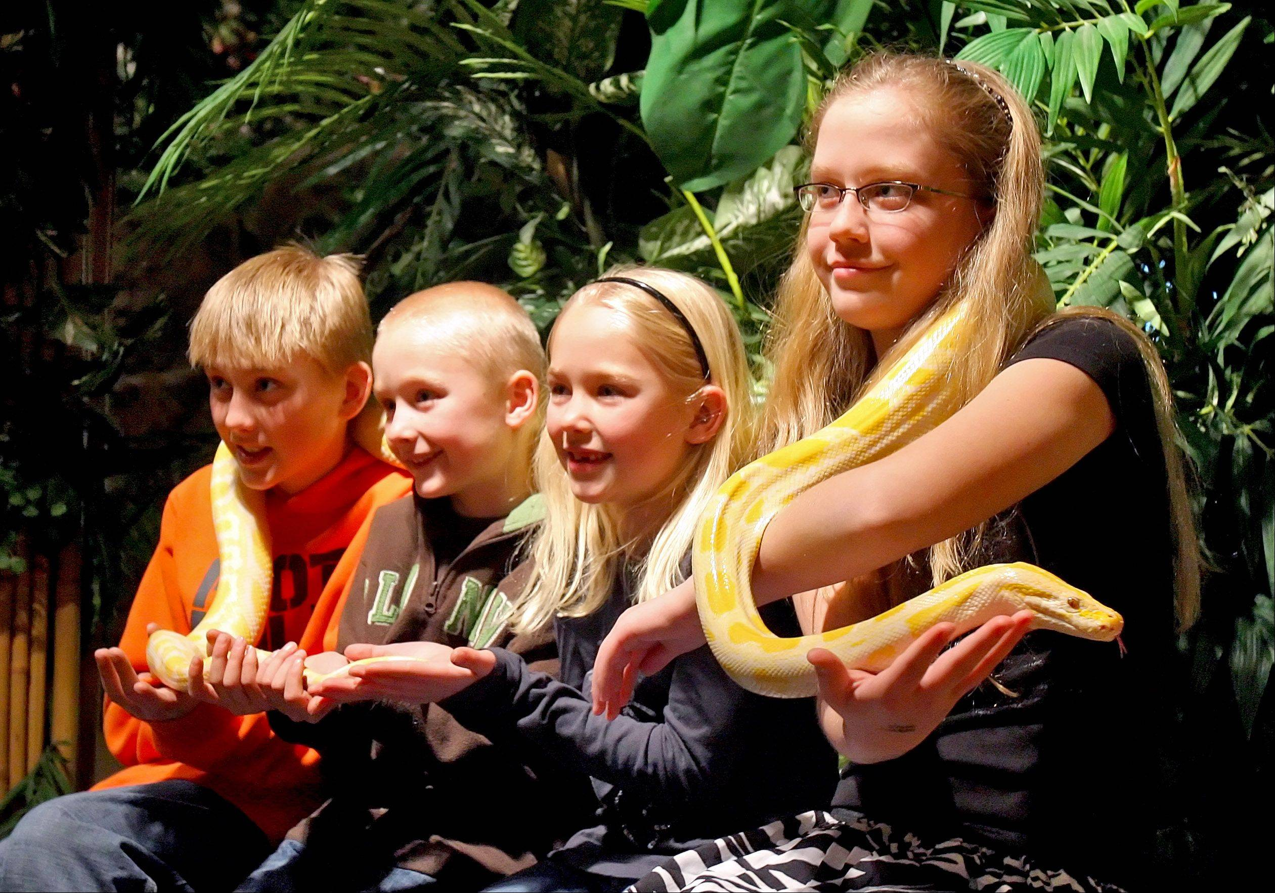 "Cousins, left to right, Kenyon Mussehl, Owen Mussehl, Amelia Mussehl, all of Verona, Wis., and Cassidy Petersen of Volo hold ""Lemon Drop,"" an albino Burmese python inside Serpent Safari at Gurnee Mills in this photo taken in 2009."