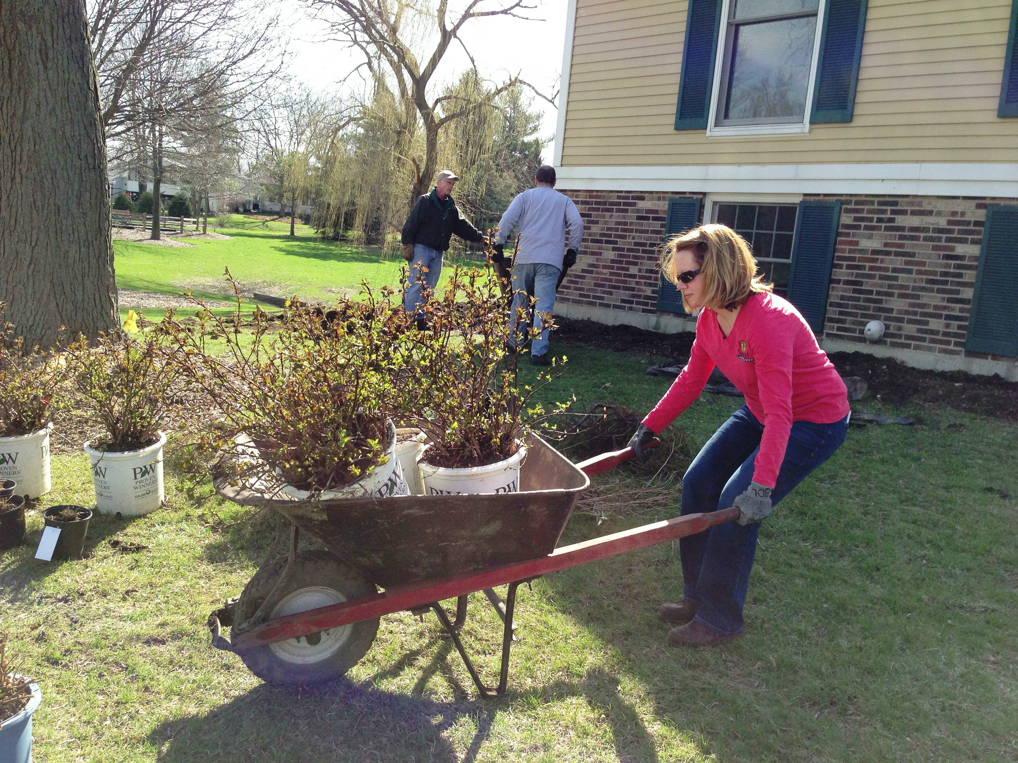 Shannon Hoban, a branch manager for Sebert Landscaping, transports new plants in part of a landscape renovation that Sebert employees donated to Sage House Group Home for Individuals with Autism on Earth Day.