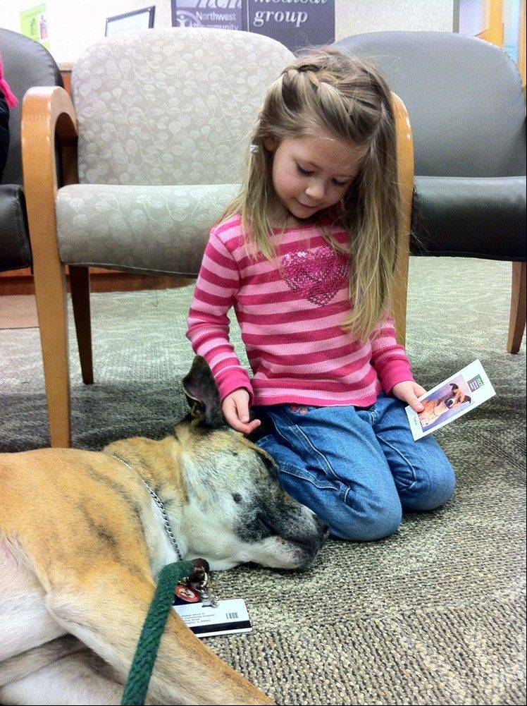 Caesar, a therapy dog, comforts a patient in the NCH Medical Group waiting room.