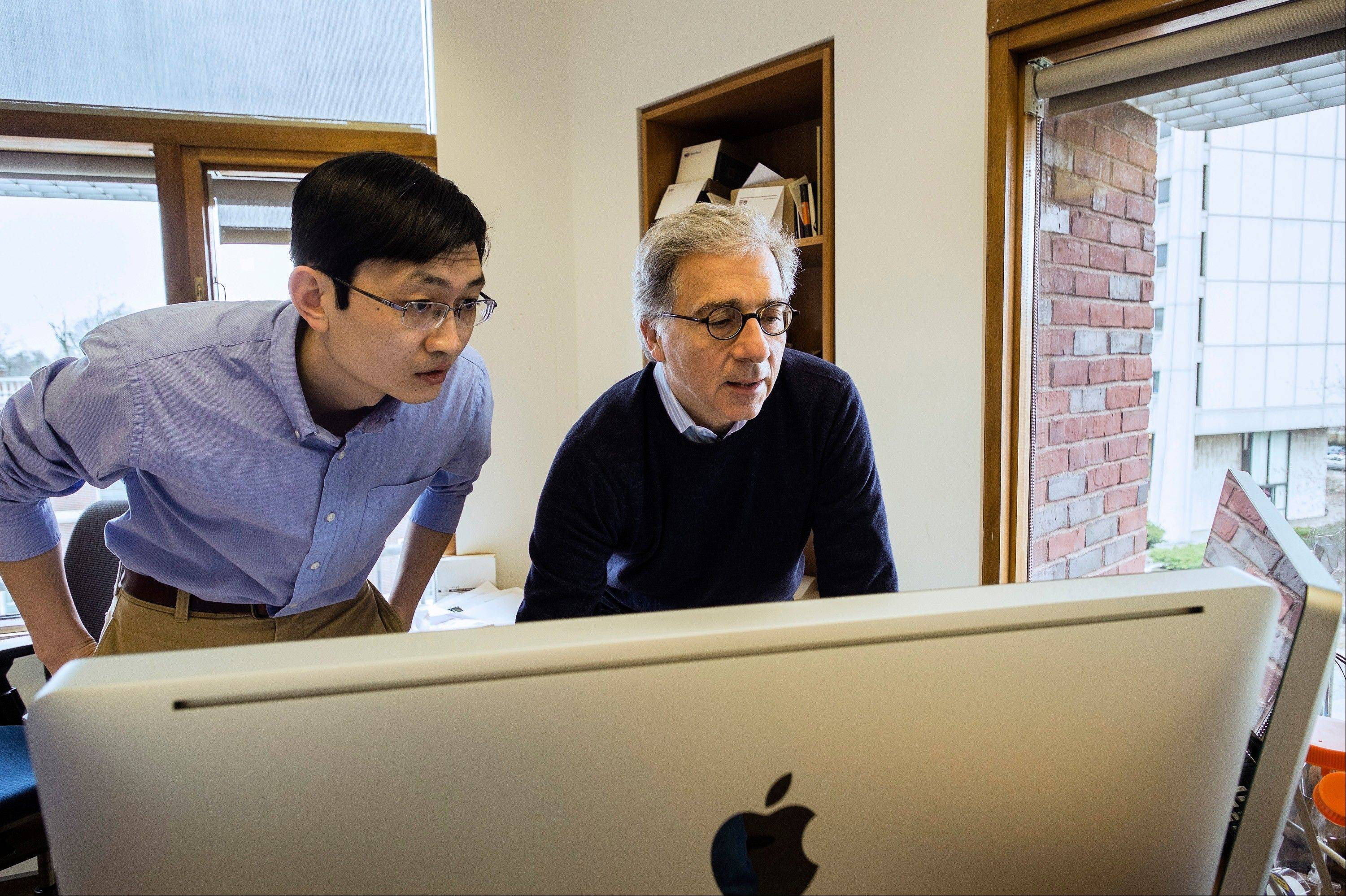 Harvard Stem Cell Institute Co-Director Doug Melton, right, and Peng Yi, a post doctoral fellow in his lab, review data from recent experiments in Melton's lab in Cambridge, Mass.