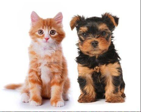 About 62 percent of all households in the United States have a pet, according to the American Pet Products Association. The American Society for the Prevention of Cruelty to Animals says the majority of those are obtained from acquaintances and family members.