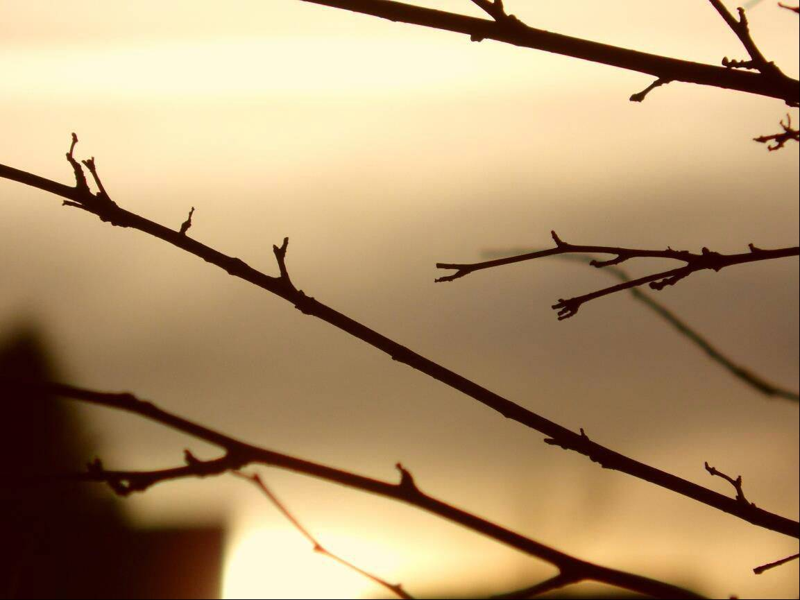 This photo was taken in my backyard. I was inspired to take this photo because it was the first cool looking sunset I have seen this spring, I wanted to add a little bit of creativity, so I focused it on a couple of tree branches. I'm a freshman at Dundee-Crown High School.