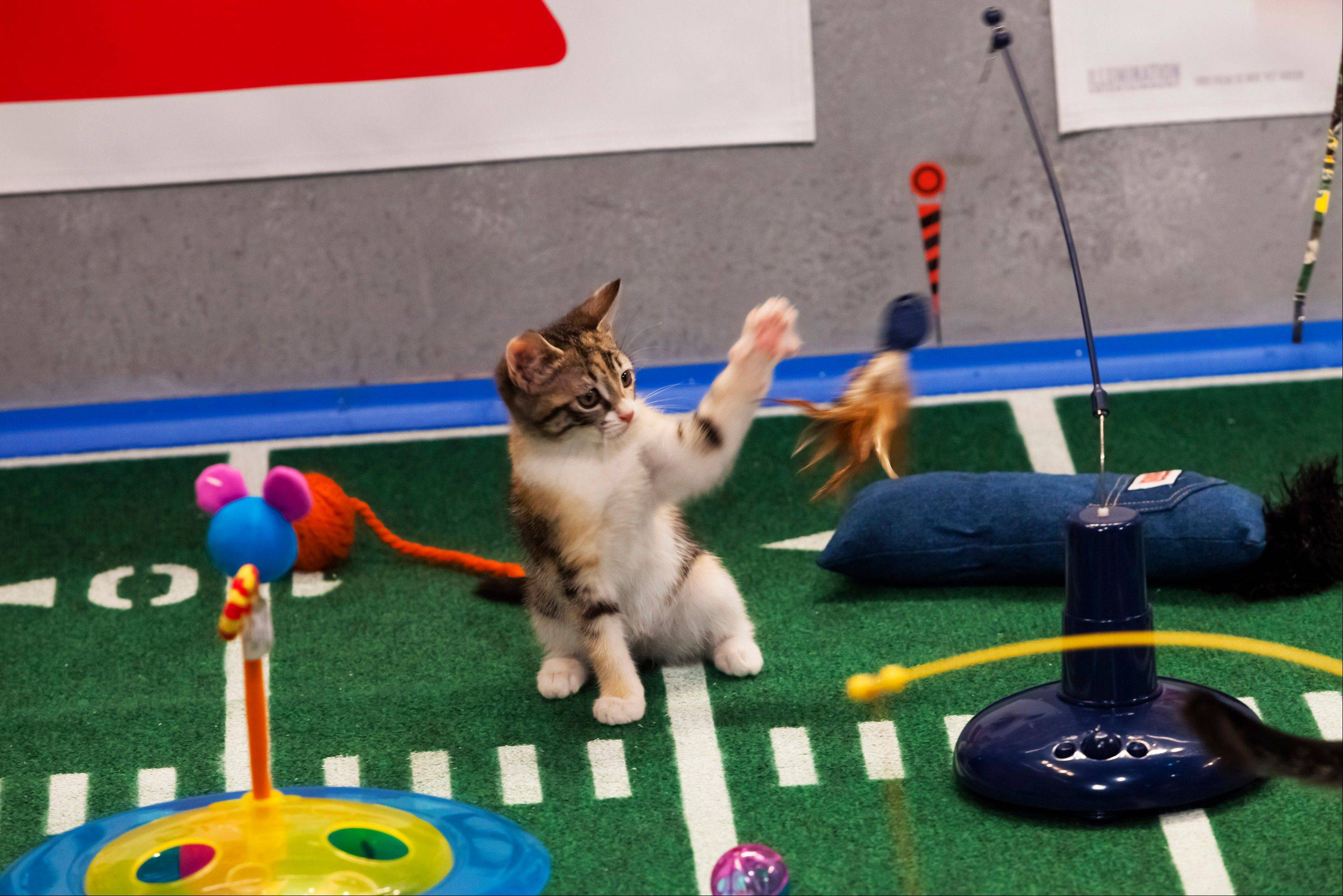 The inaugural Kitten Bowl will be shown on the Hallmark Channel. The show is part of Hallmark's Pet Project Initiative and will be done with partner American Humane Association.