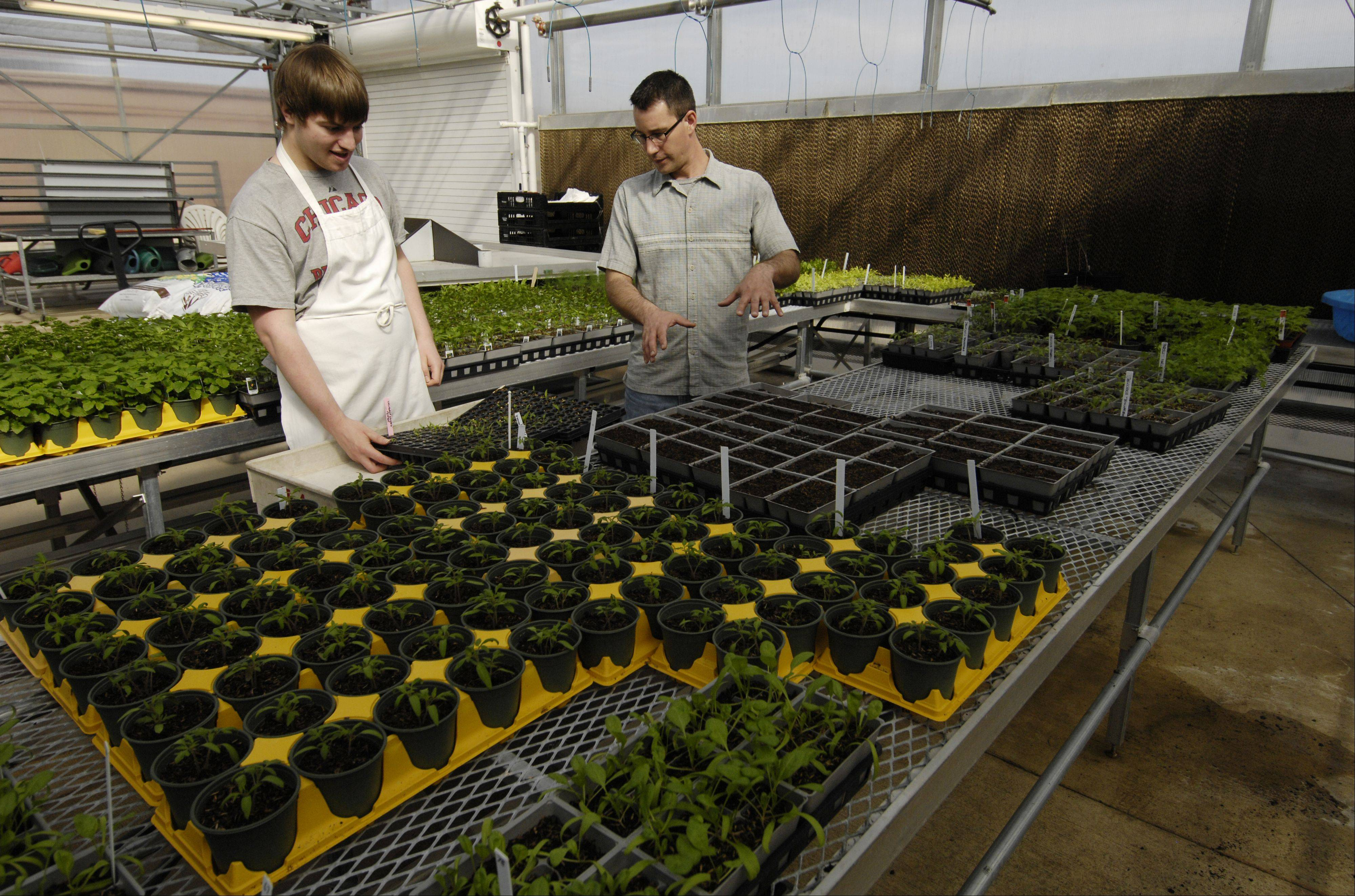 Student volunteer William Pourch works with Lab Assistant Marty Bartz in the College of DuPage greenhouse, transplanting hot peppers.