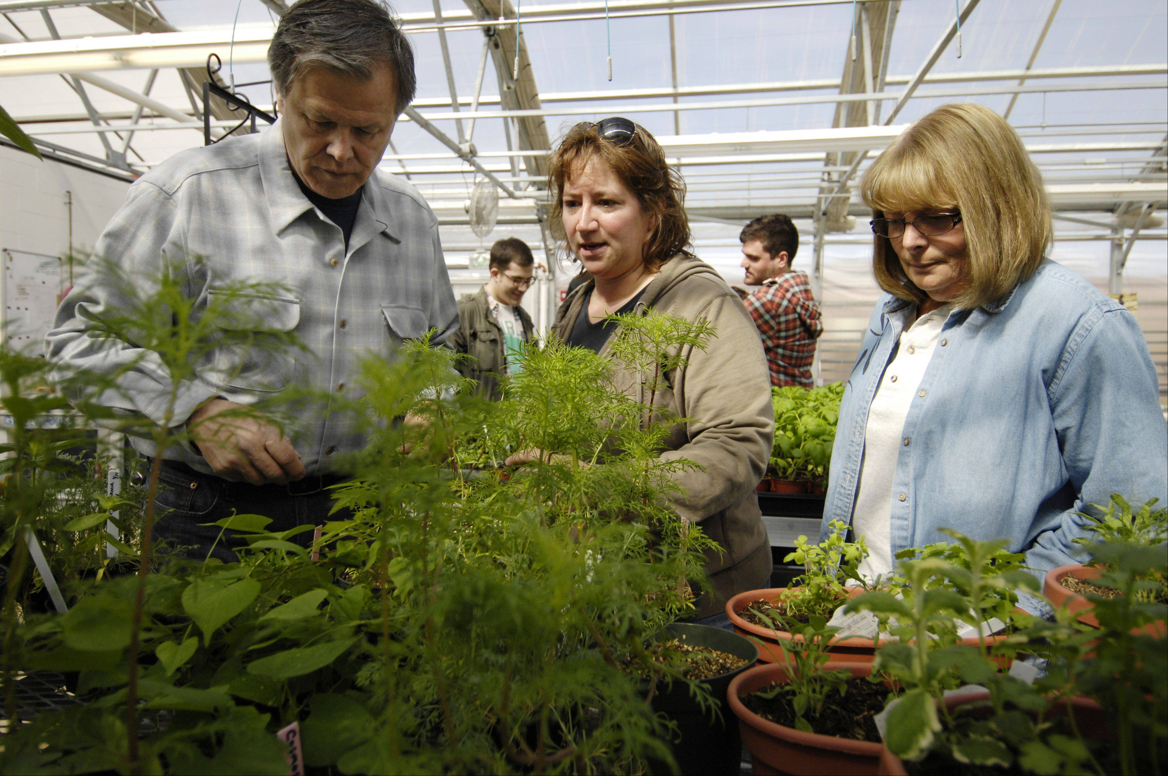 Amy Hull, center, College of DuPage greenhouse supervisor and adjunct factuality member works with student Bruce Adamec of Hinsdale and volunteer Carol Lachance of Lombard.