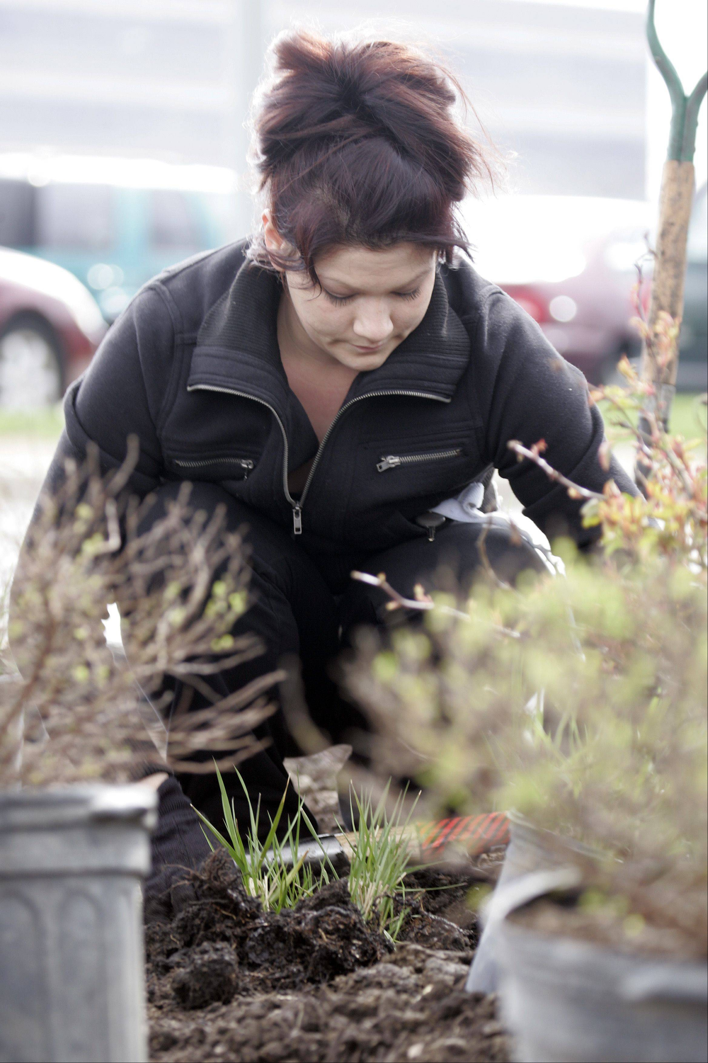 Cheyenne Meadows of John B. Sanfilippo and Son, INC. plants perennials on the Fisher Nut property in Elgin Thursday. More than 100 employees took time out of their day to help plant and give back to the environment. This is the fourth year that the Elgin company has observed Earth day this way.